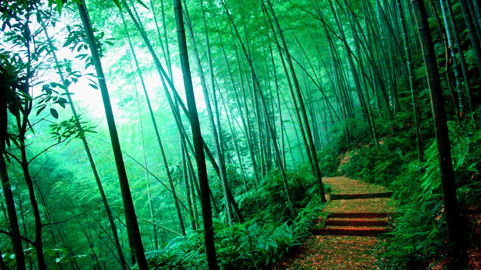 1920x1080 Bamboo Forest - Google Search