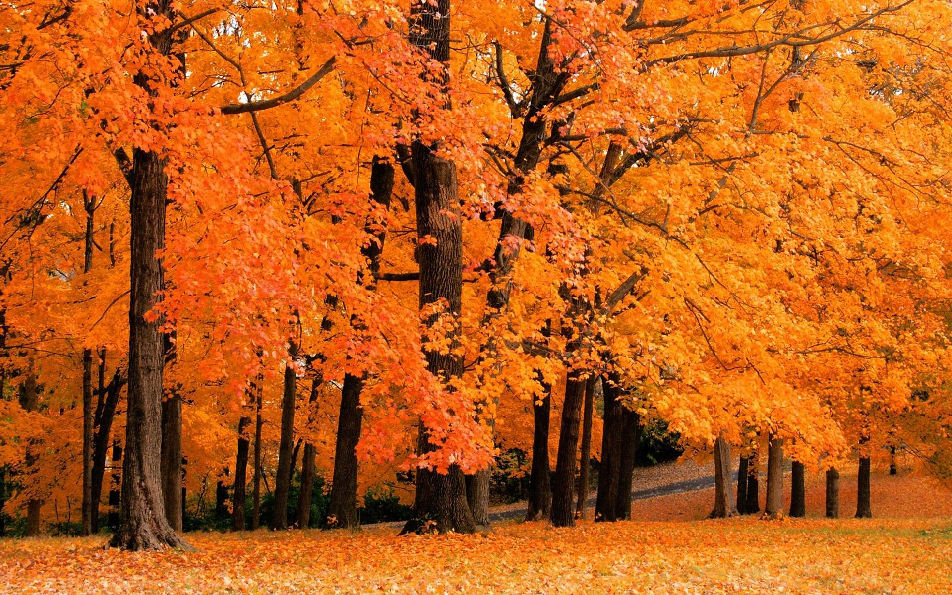 1920x1200 Autumn Trees Photo: This Photo Was Uploaded By DeborahWhite. Find  Other Autumn Trees