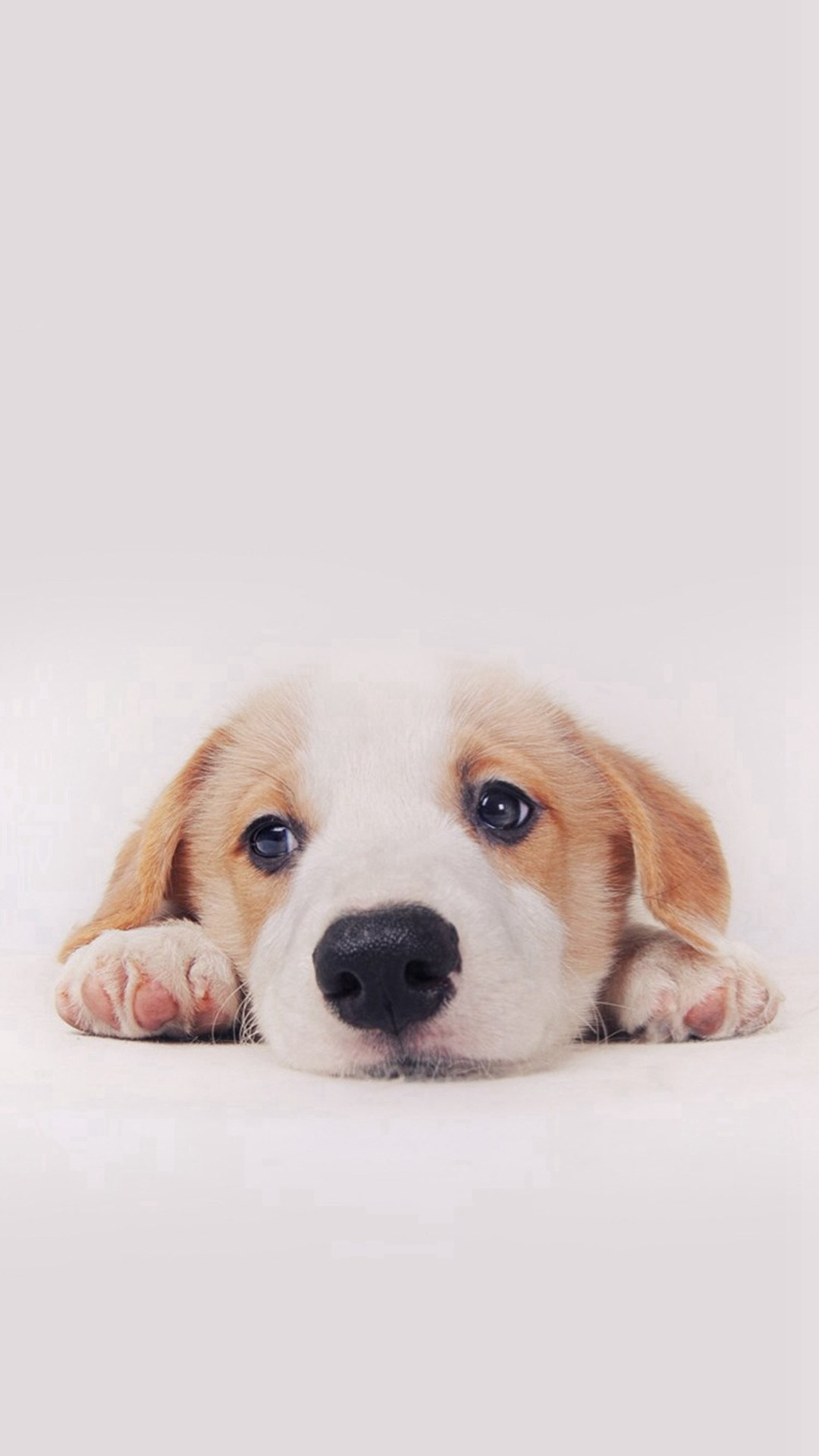 puppy dog wallpaper - photo #22