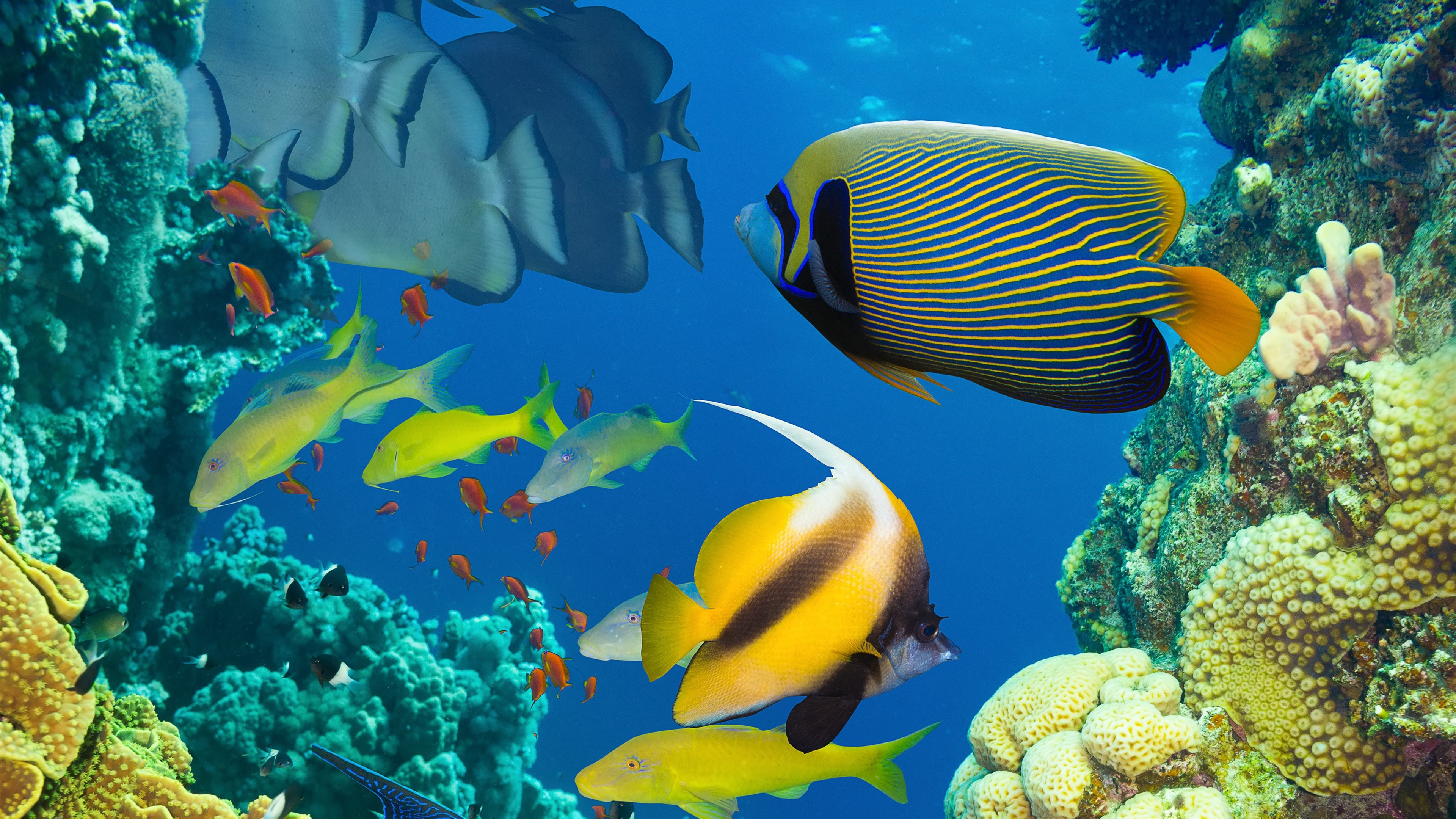 3840x2160 Beautiful fish in the sea, underwater, coral reef Wallpaper Preview
