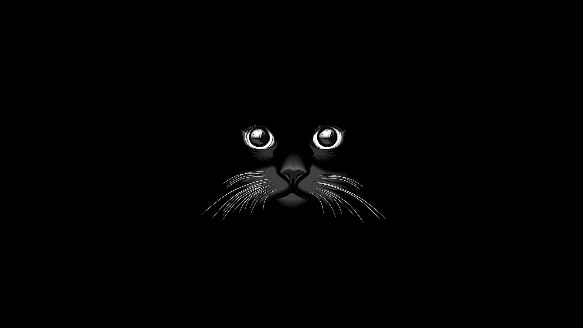 Black Cat Background 65 Images