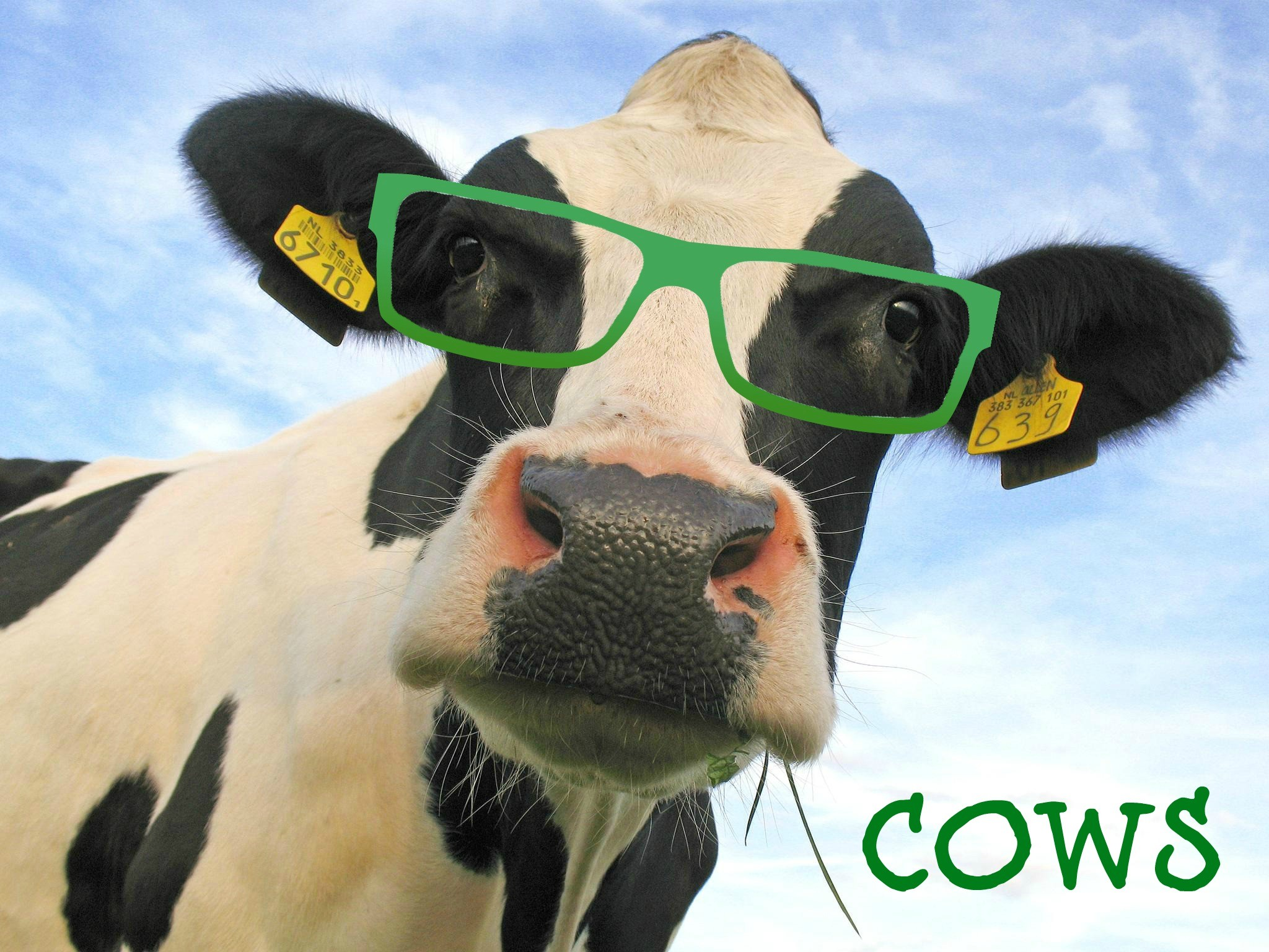 Funny Cow Wallpaper (54+ images)
