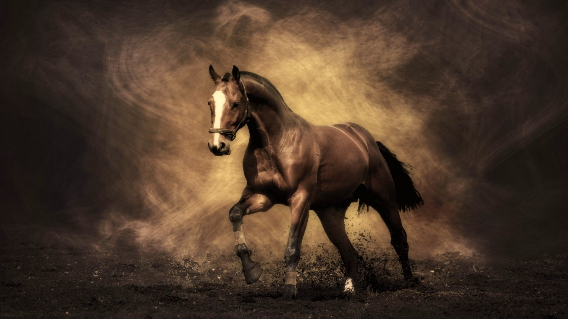 Beautiful Horse Wallpaper 66 Images