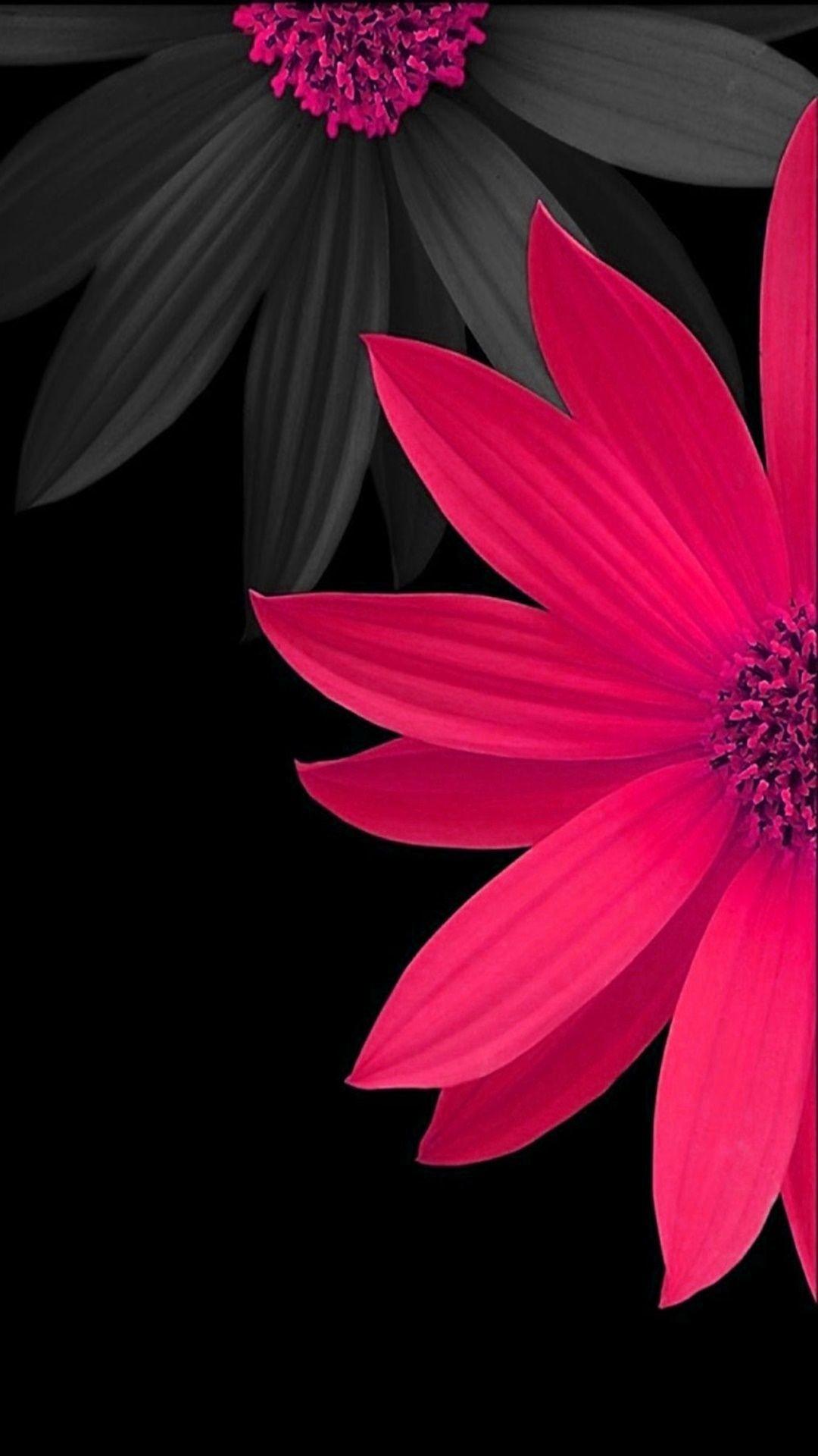 Black Flower Wallpaper 64 Images