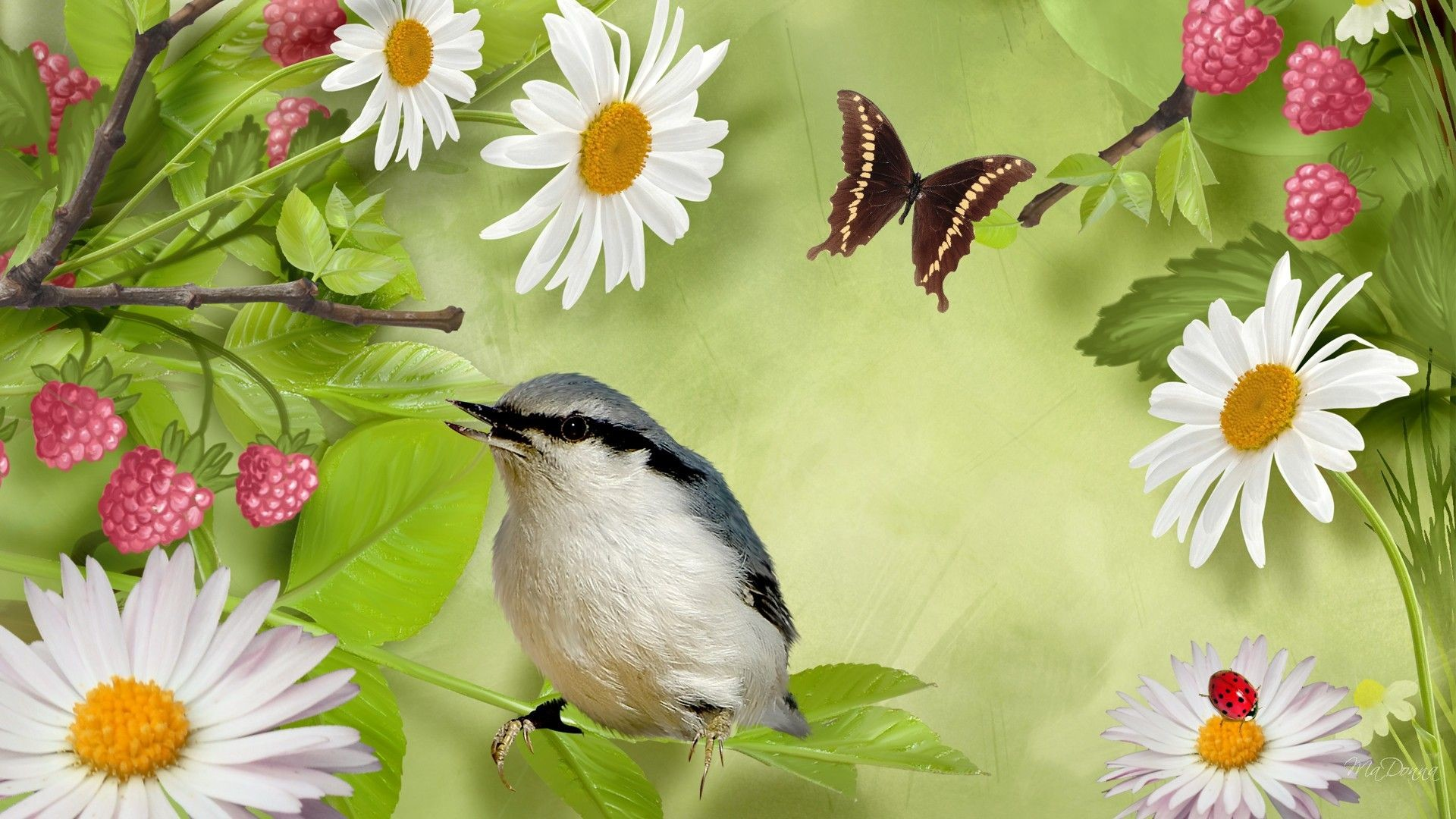 1920x1080 Beautiful Birds And Flowers wallpaper