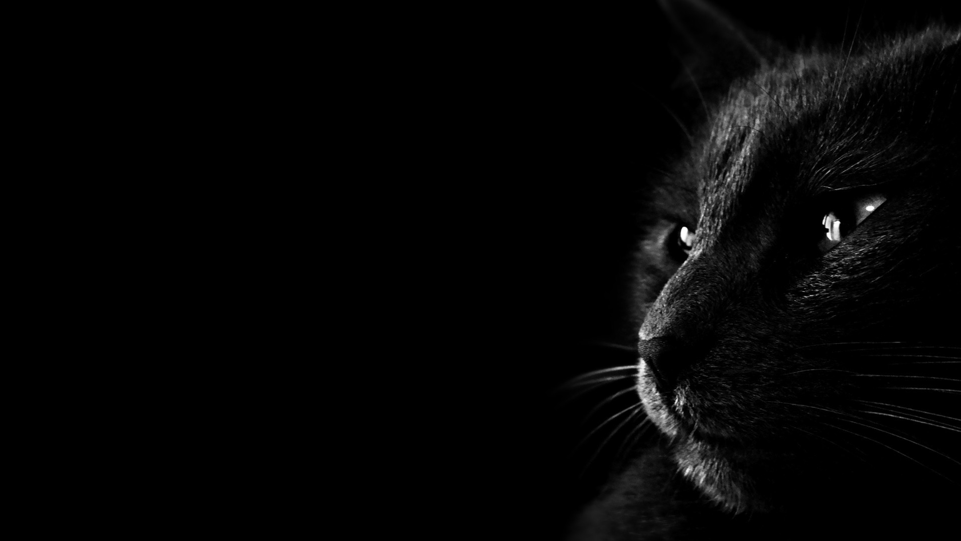 1920x1080 Black-Cat-Wallpaper-3.jpg