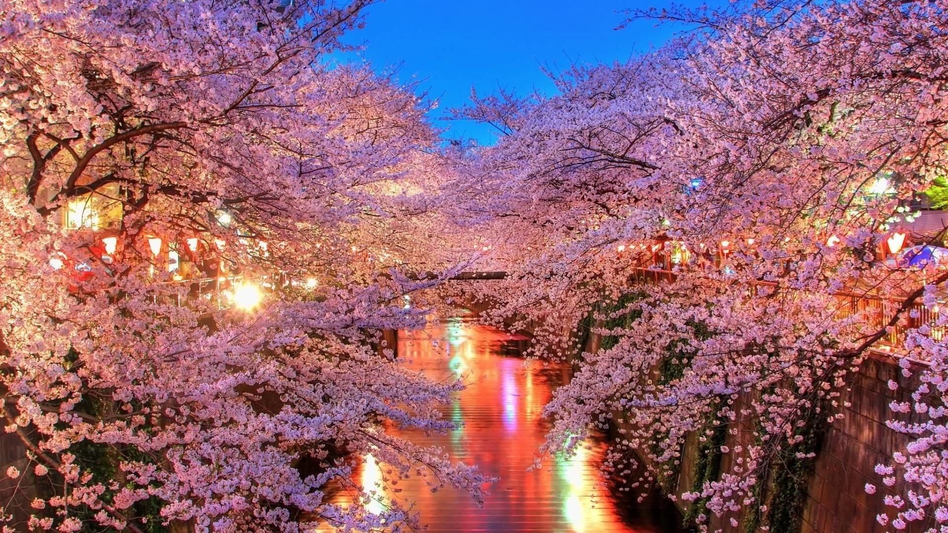 1920x1080 Free Cherry Blossoms City Lights Wallpapers