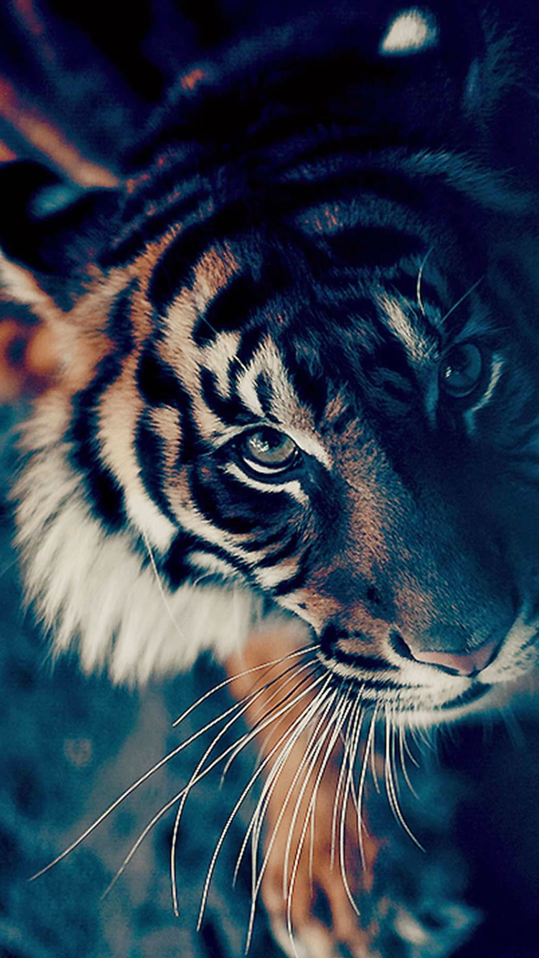 Animated Tiger Wallpaper 56 Images