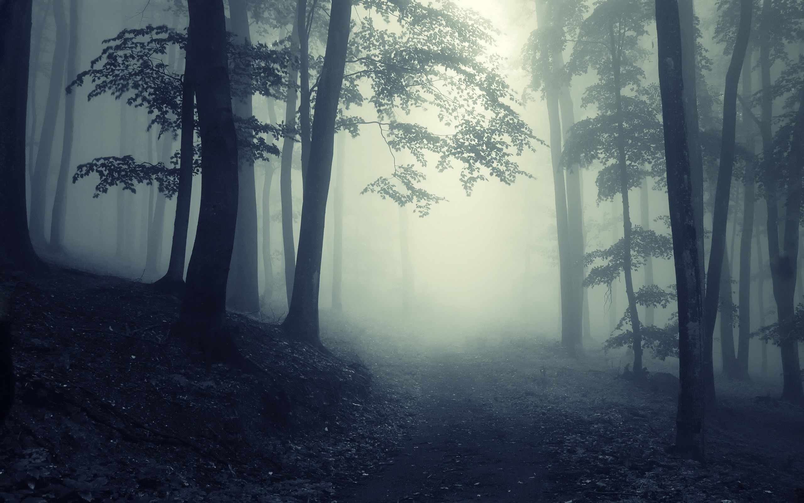 2560x1600 Explore Foggy Forest, Dark Forest and more!
