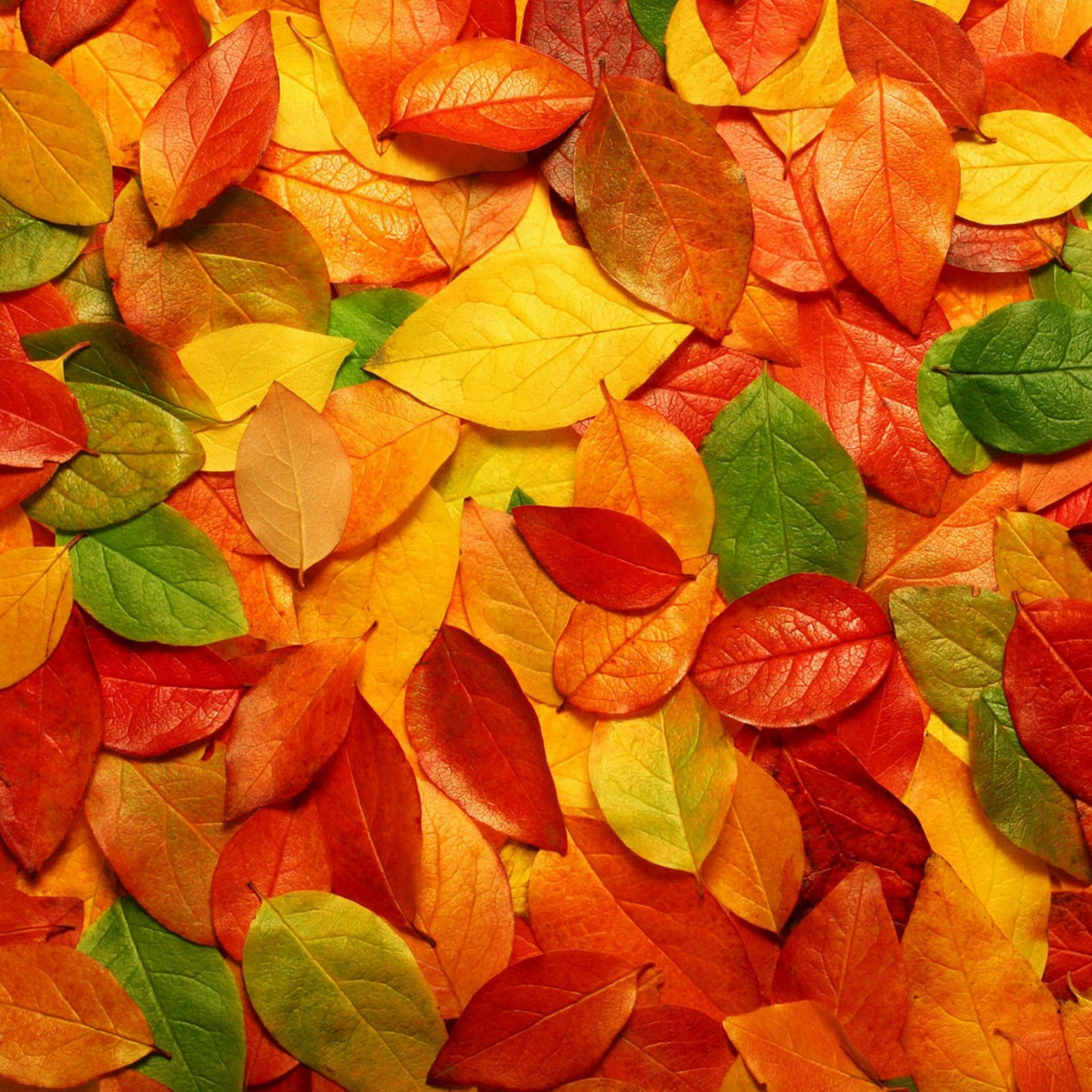 Abstract Fall Wallpaper (55+ Images