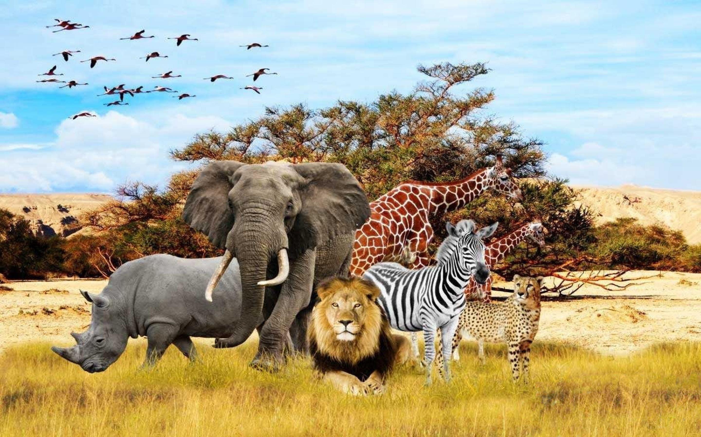 Safari Animal Wallpaper 60 Images