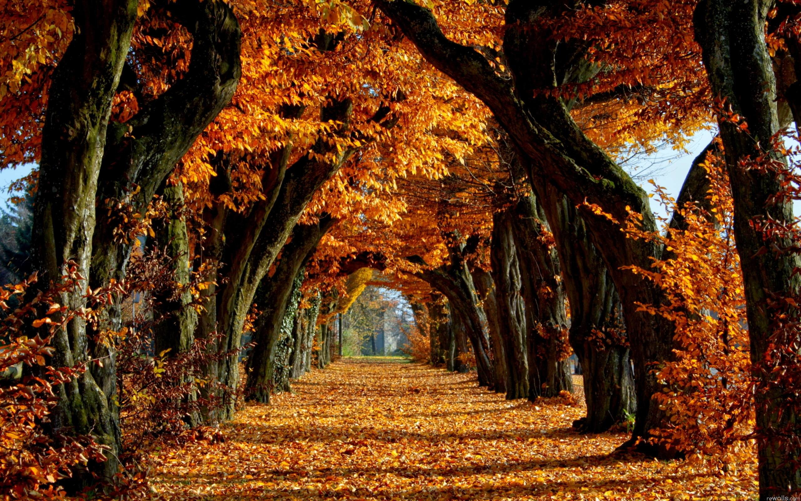 Fall Trees Wallpaper 70 Images