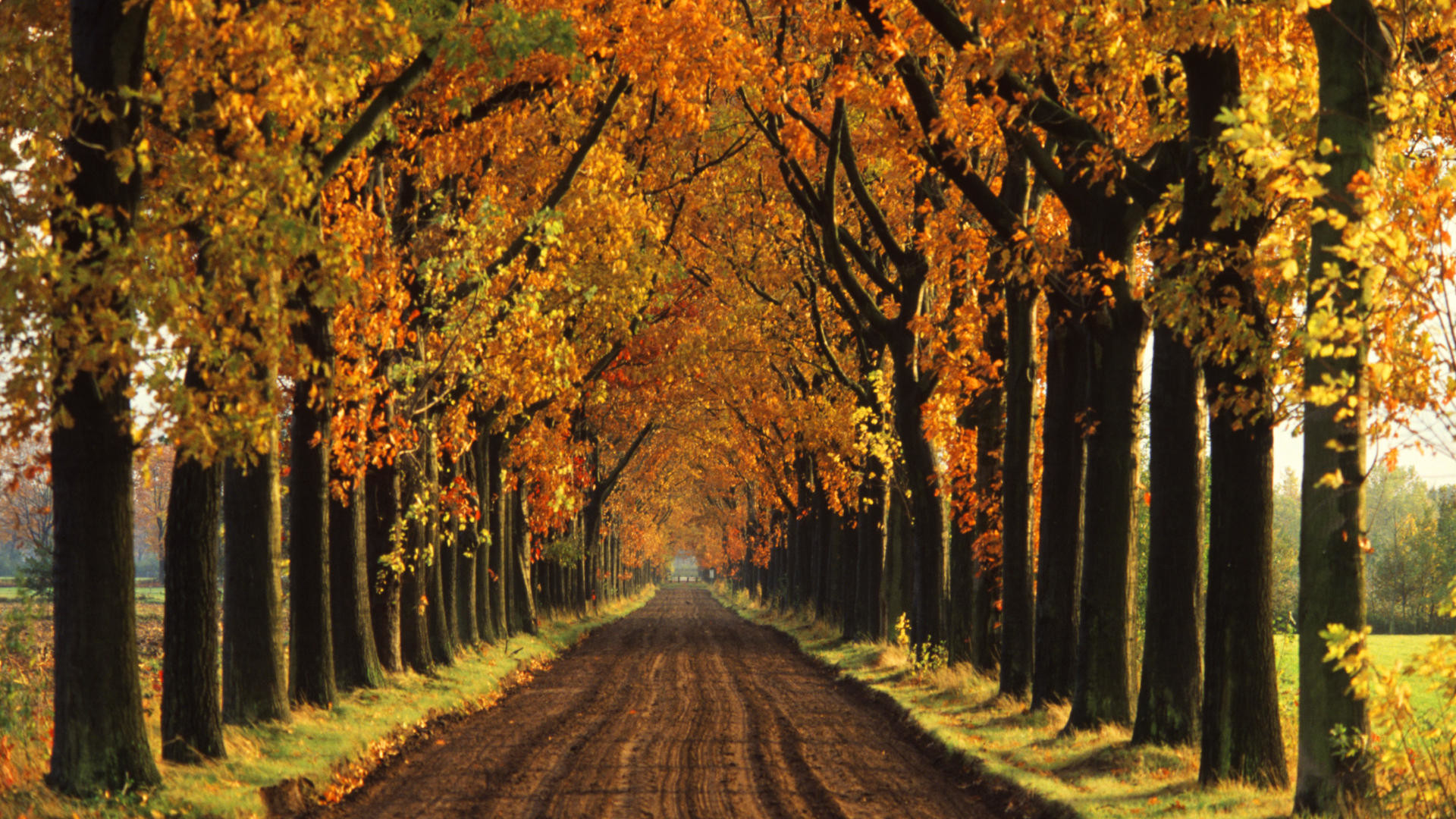 fall tumblr backgrounds trees hd 67612 loadtve