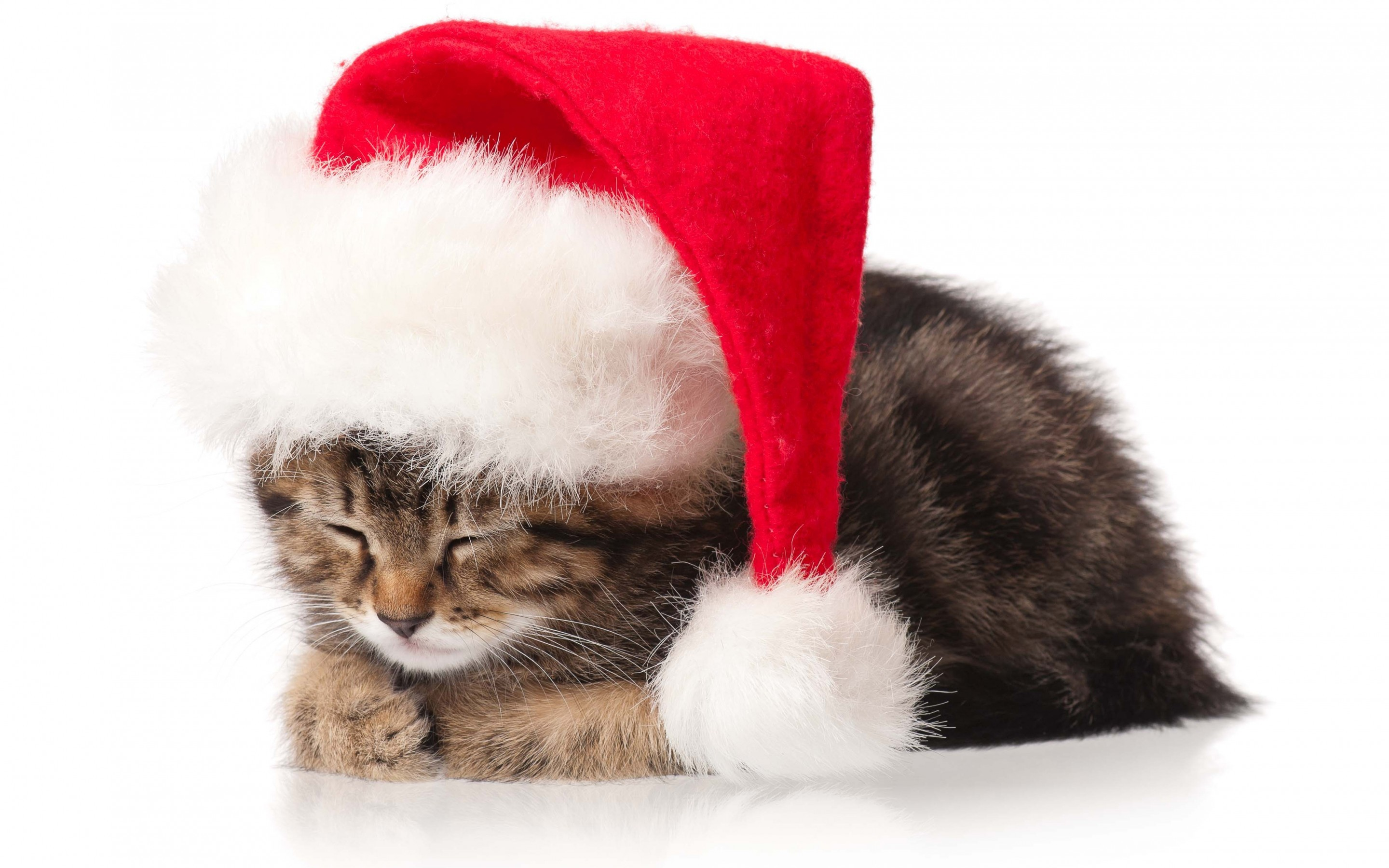 2880x1800 Cat Kitten Christmas Holidays New Year wallpaper by LadyGaga .