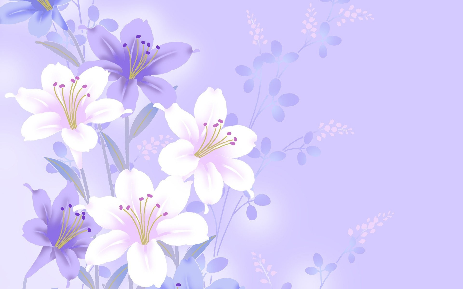Purple Flower White Background 41 Images