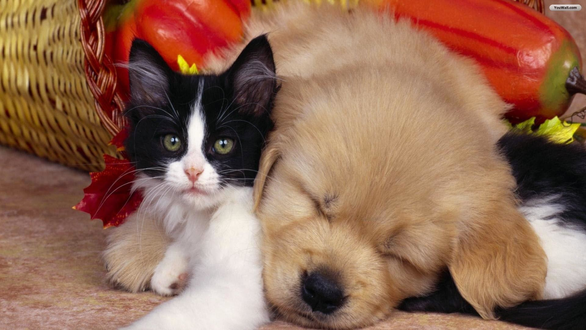 1920x1080 Cute-cat-and-dog-wallpaper