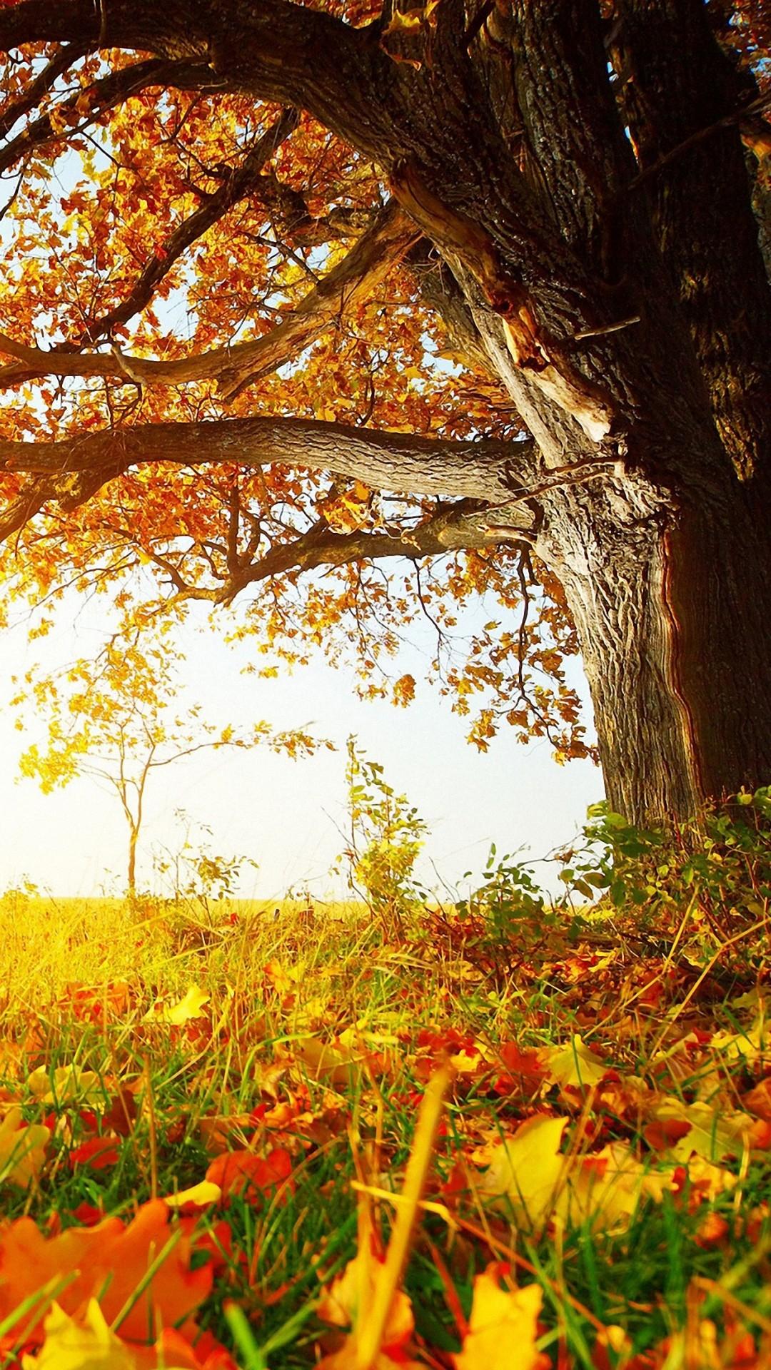 IPhone 6 Autumn Wallpaper (87+ images)