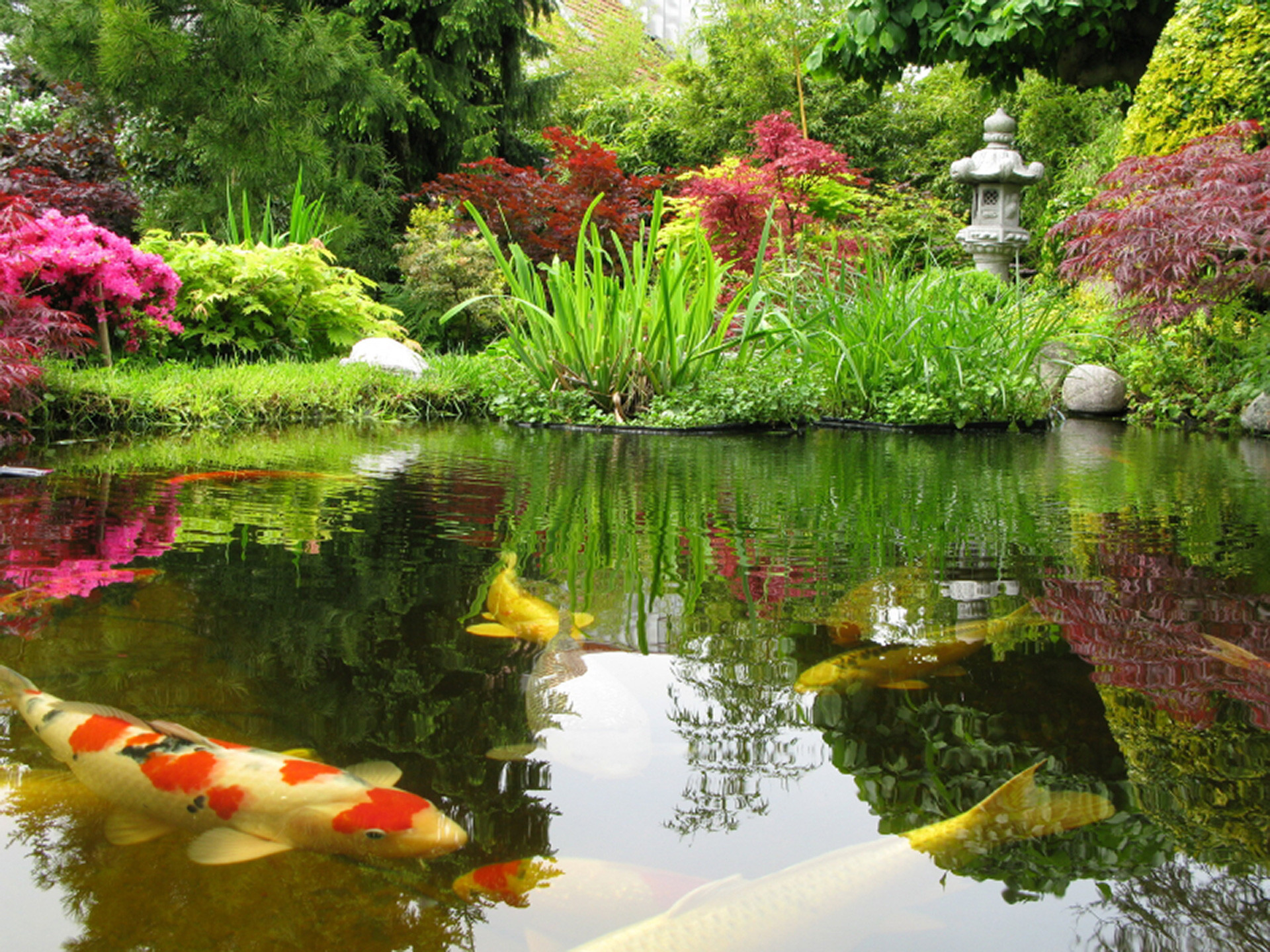 1920x1440 Residential Outdoor Koi Ponds - Long Island New York - Okeanos Aquascaping
