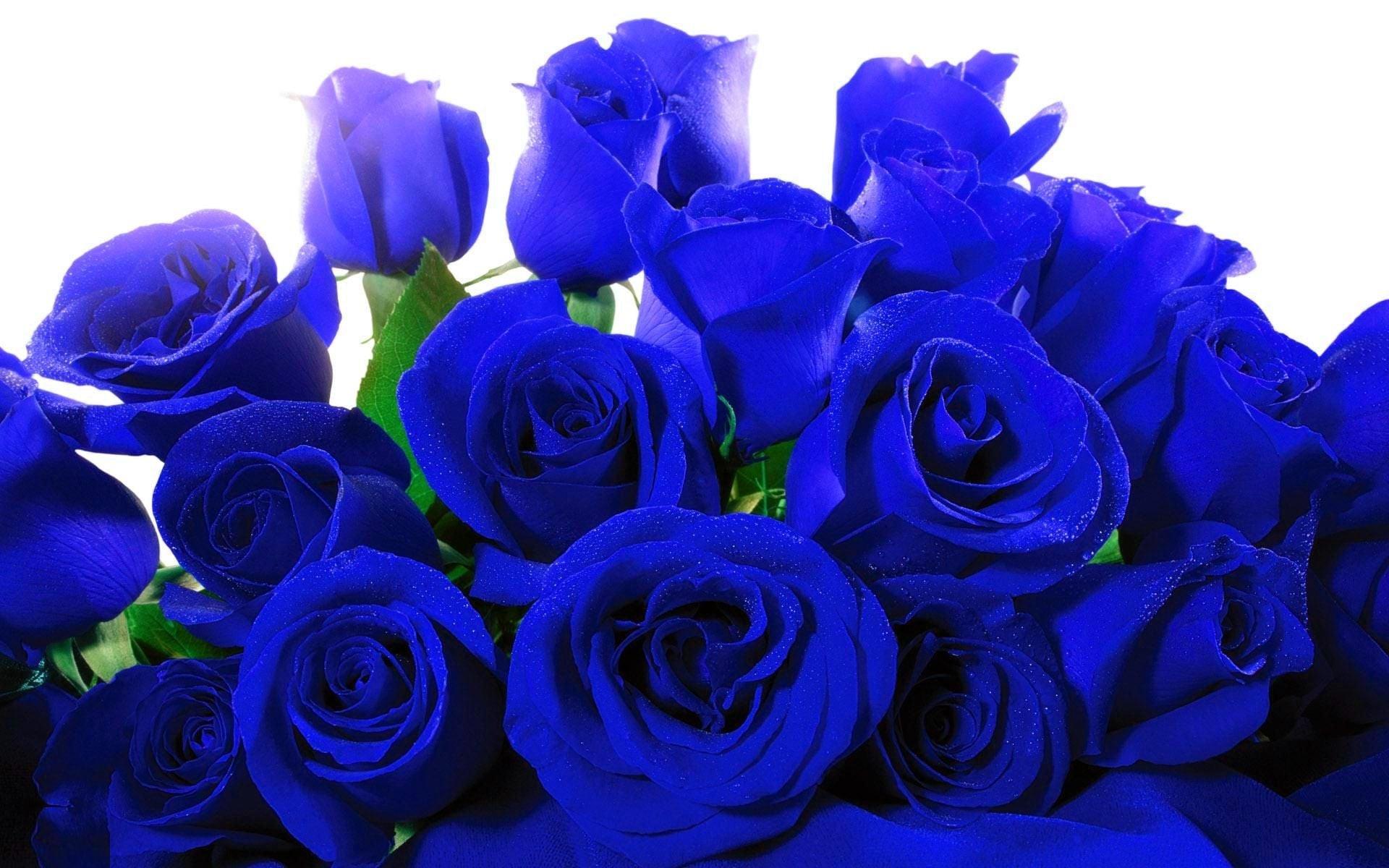 Blue Roses Wallpaper 58+ images