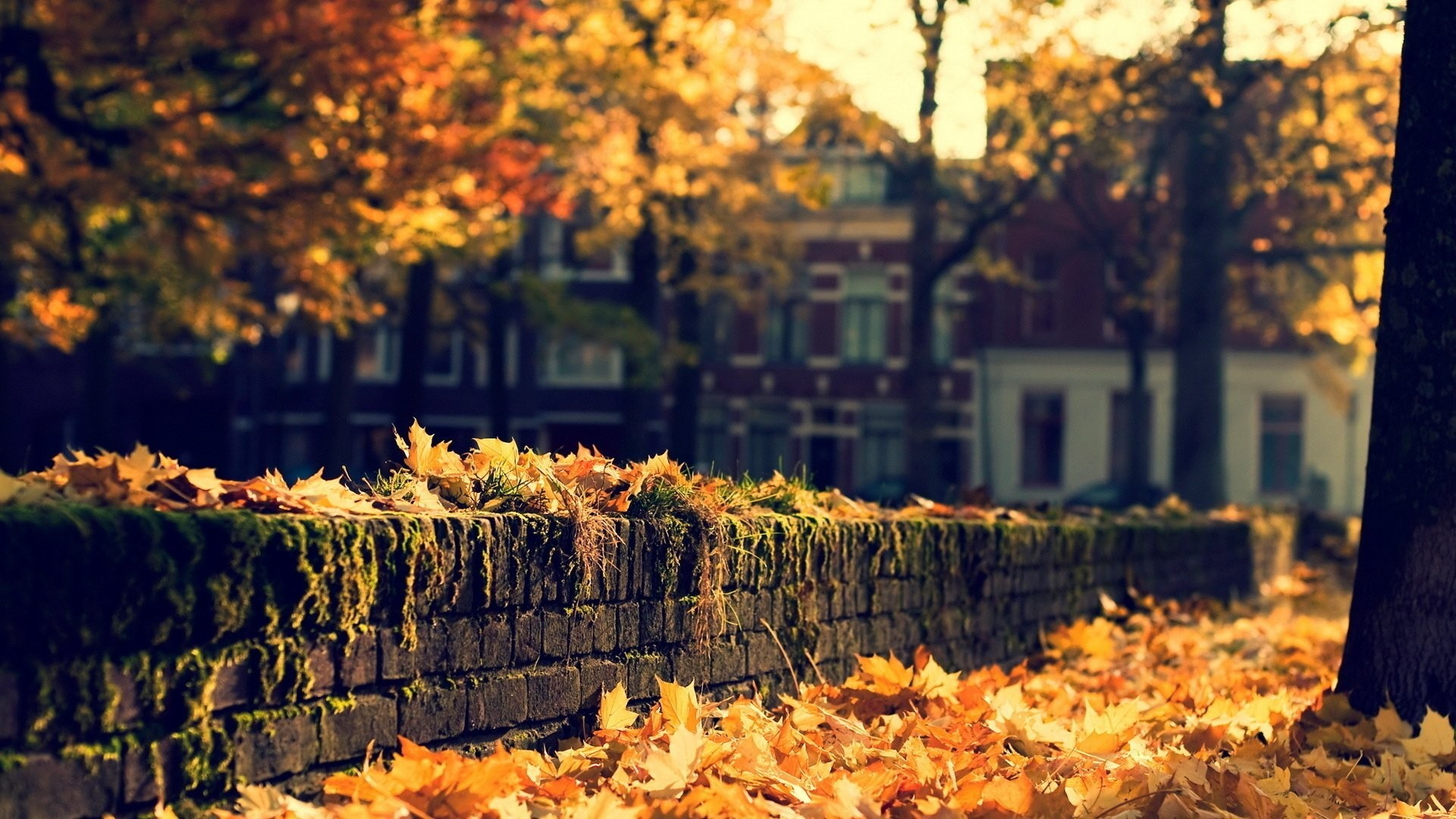 1920x1080 City Autumn Nature Street Beauty Hd Wallpapers  -