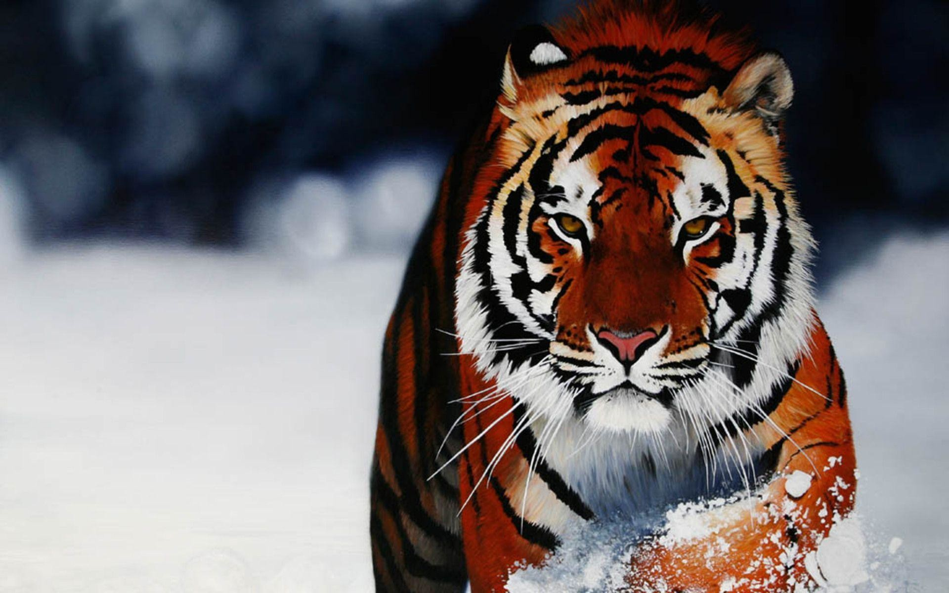 tigers backgrounds (69+ images)