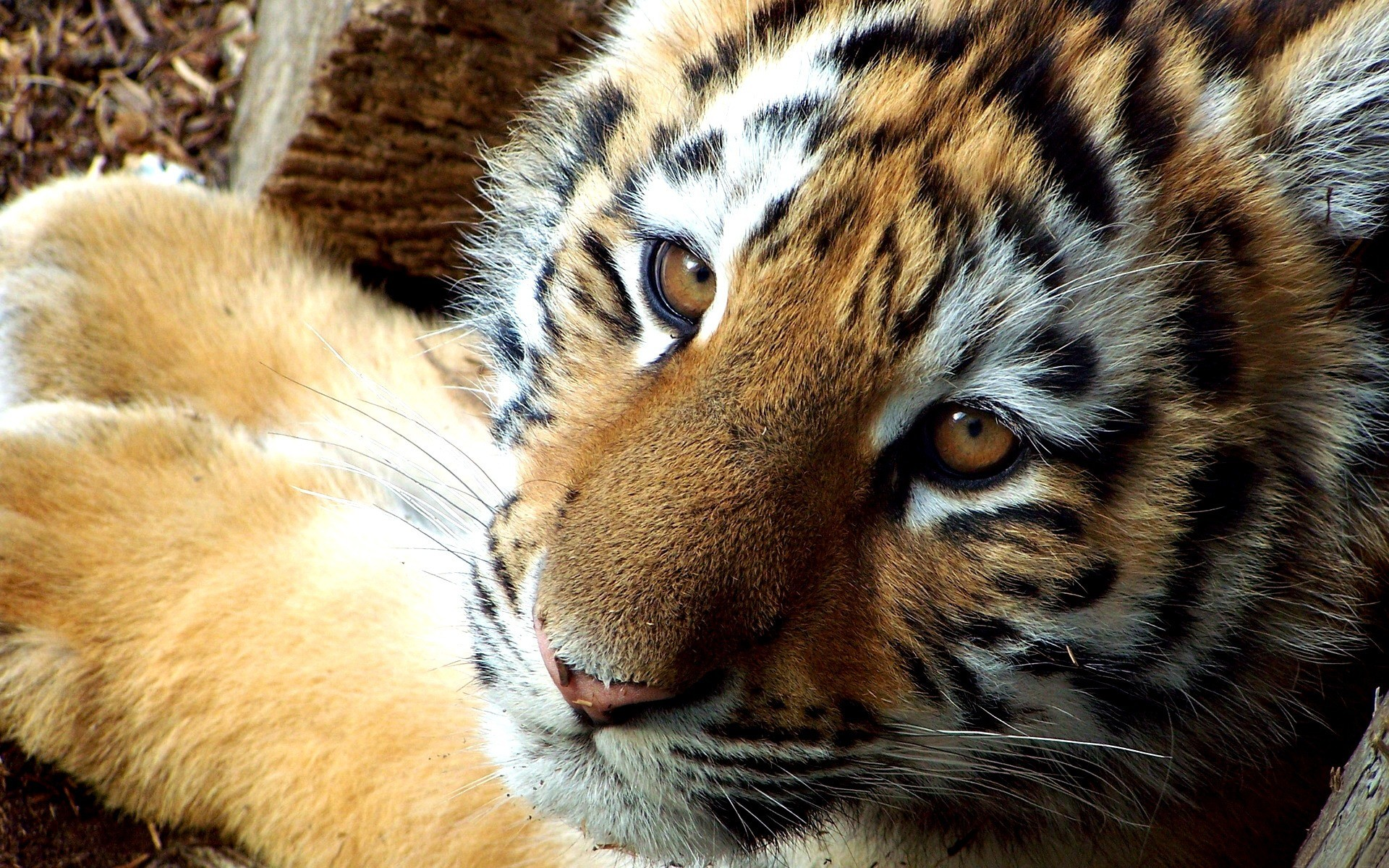 Amazoncom Wild Animal Photo Frames Appstore for Android