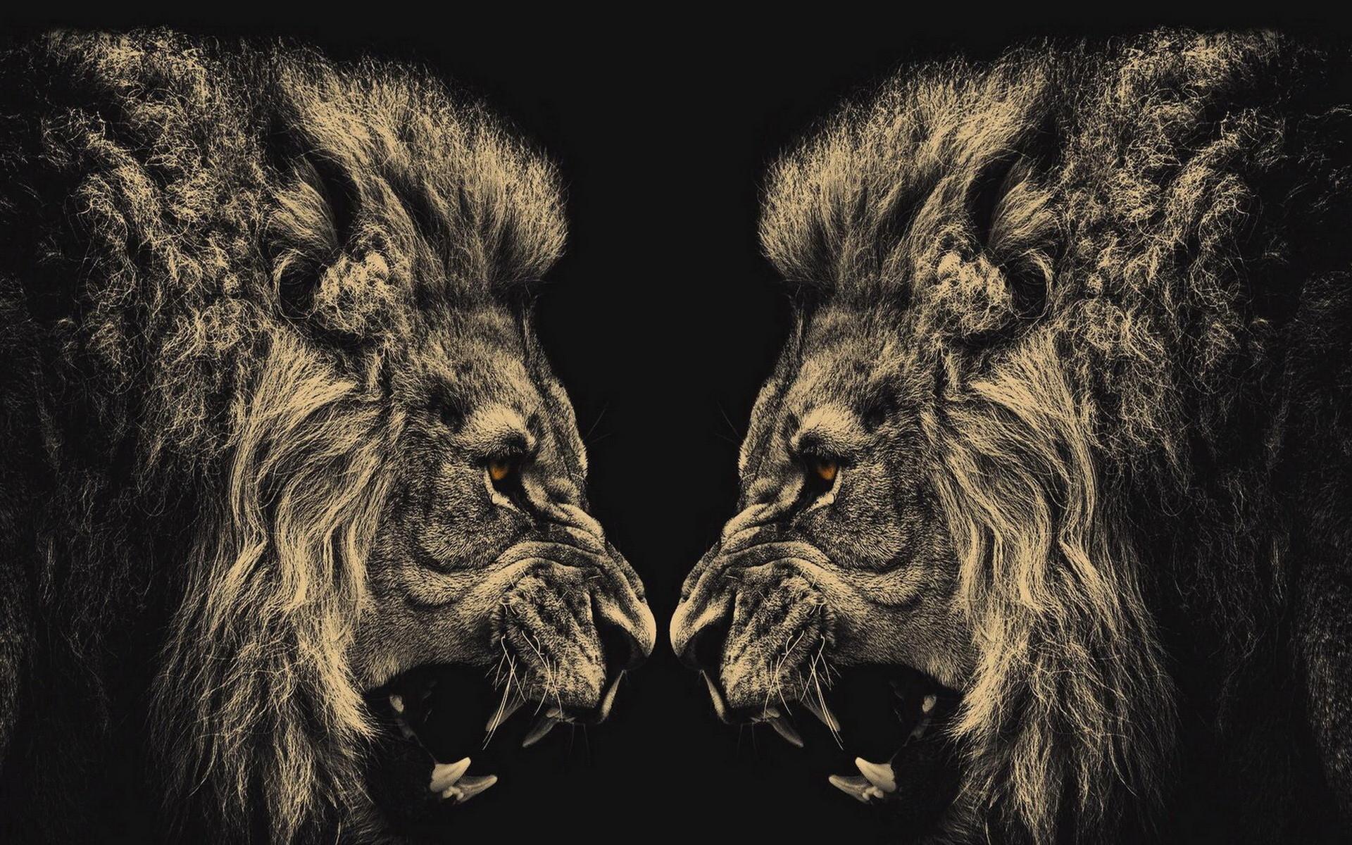 Cool Lion Wallpaper 54 Images