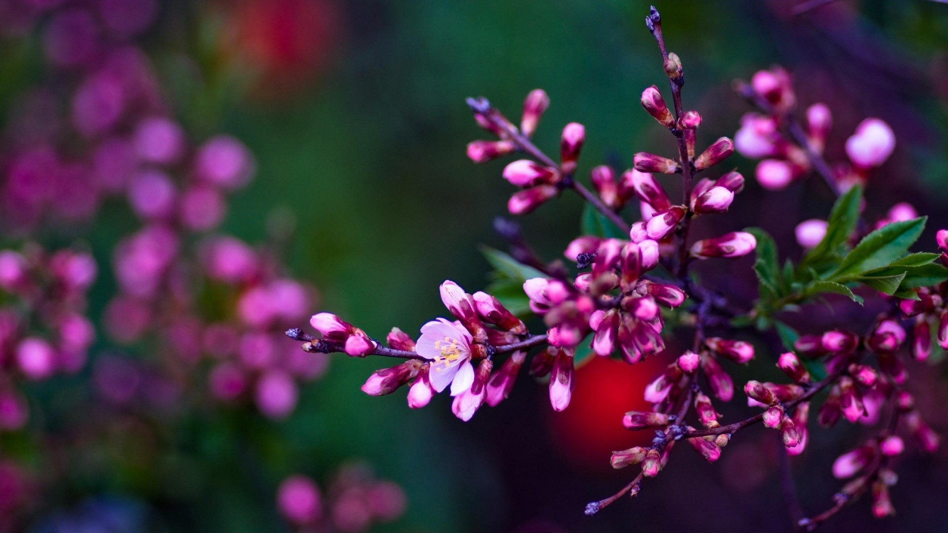 spring wallpaper and screensavers hd (70+ images)