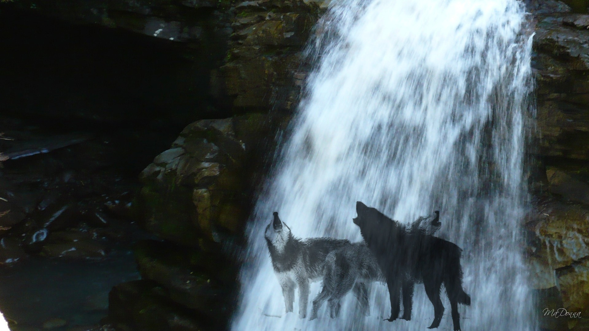 1920x1080 Katalin Szarvas - Waterfall Nature Firefox Wolf Persona Mystical Wolves  Howling Wallpaper For Mobile for HD