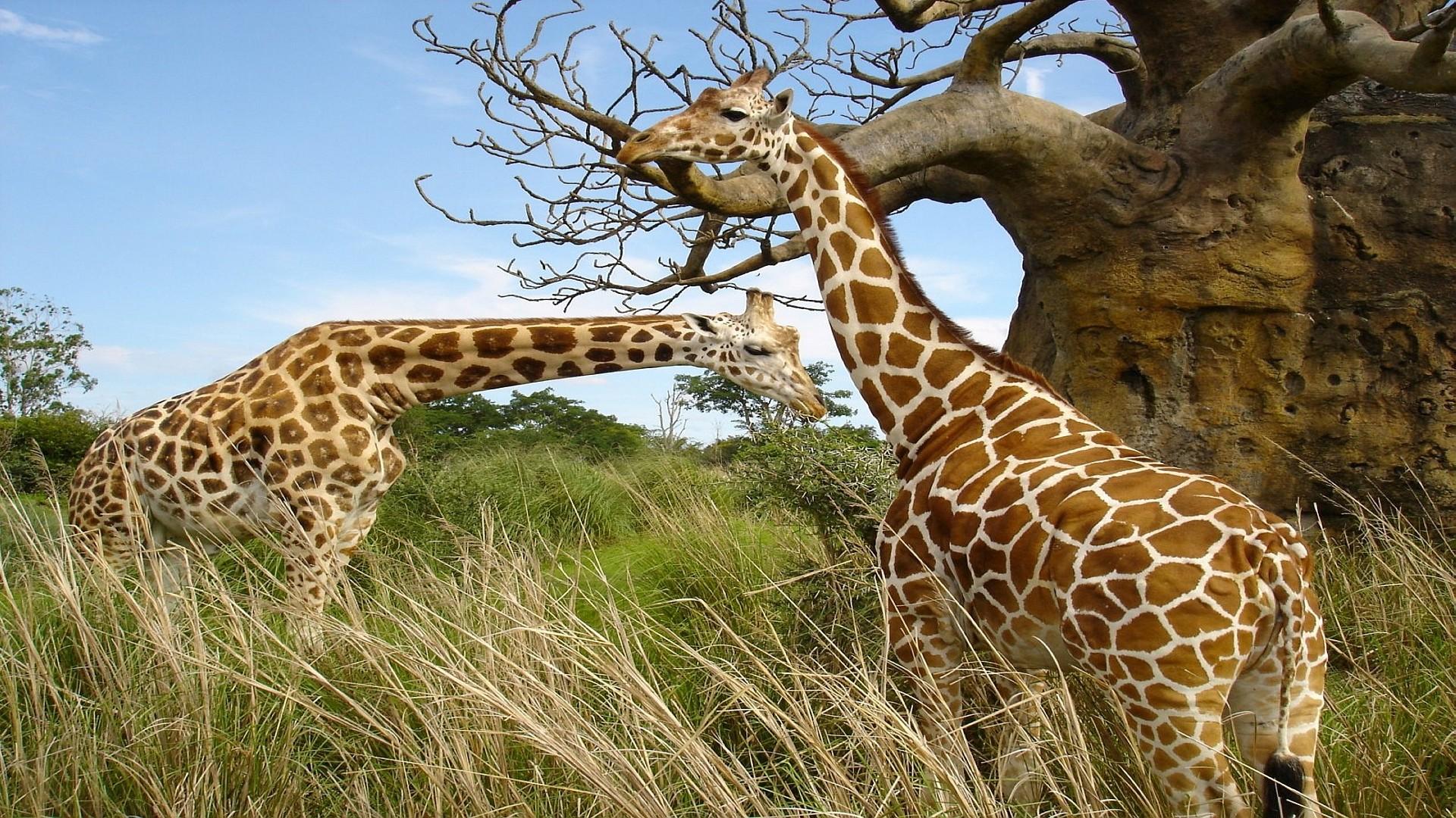 High Resolution Wallpaper Wildlife: Wildlife Desktop Wallpaper (62+ Images