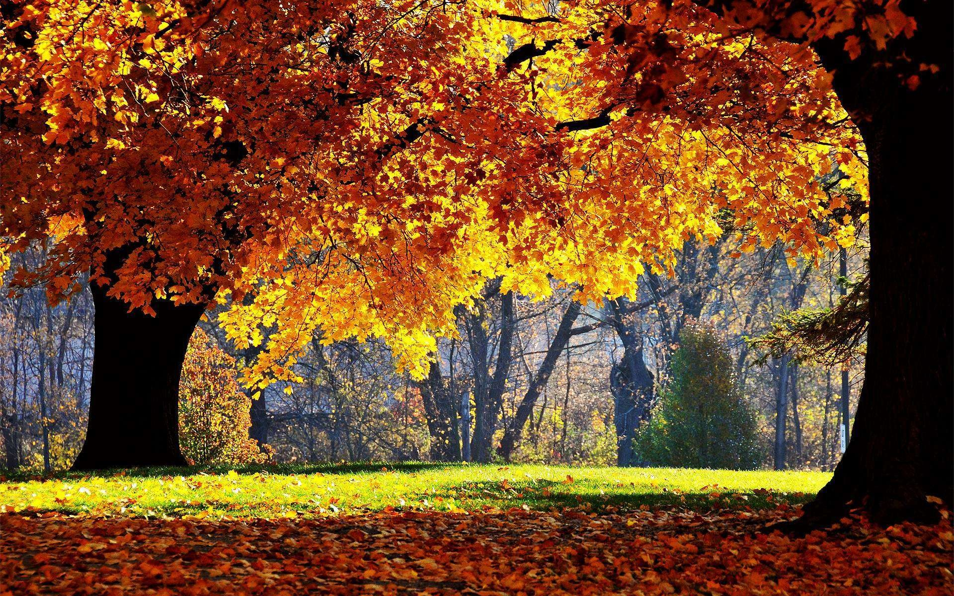 1920x1200 Autumn · desktop backgrounds ...