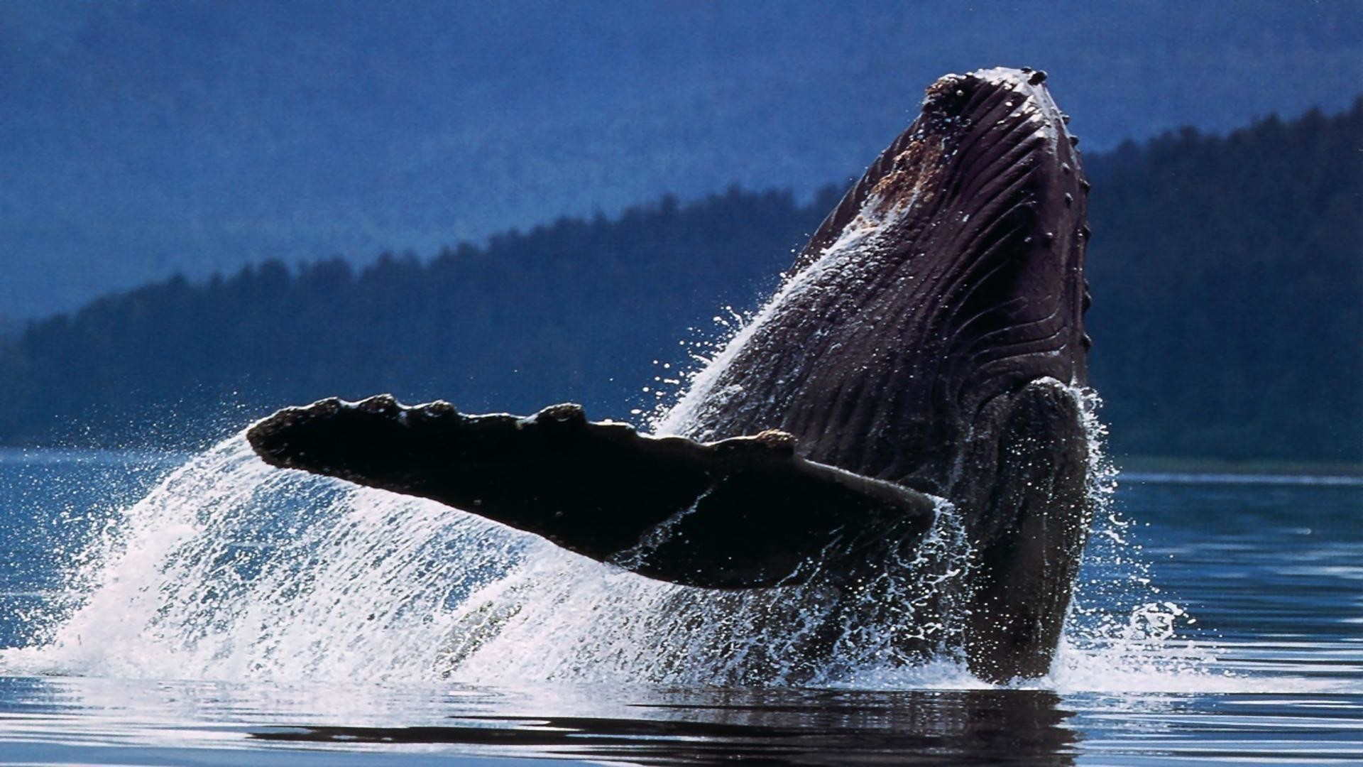 Whale Wallpapers For Desktop 57 Images