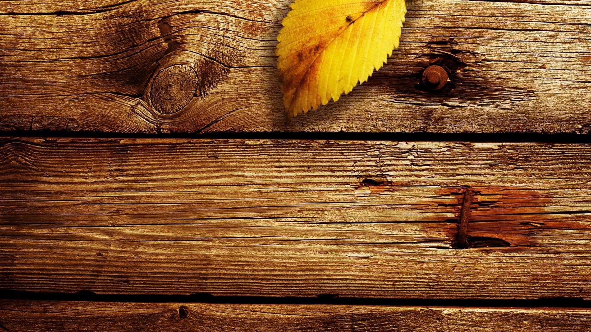 1920x1080 Wood Tag - Single Leaf Autumn Wood Photography Fall Nature Fullscreen  Wallpaper for HD 16: