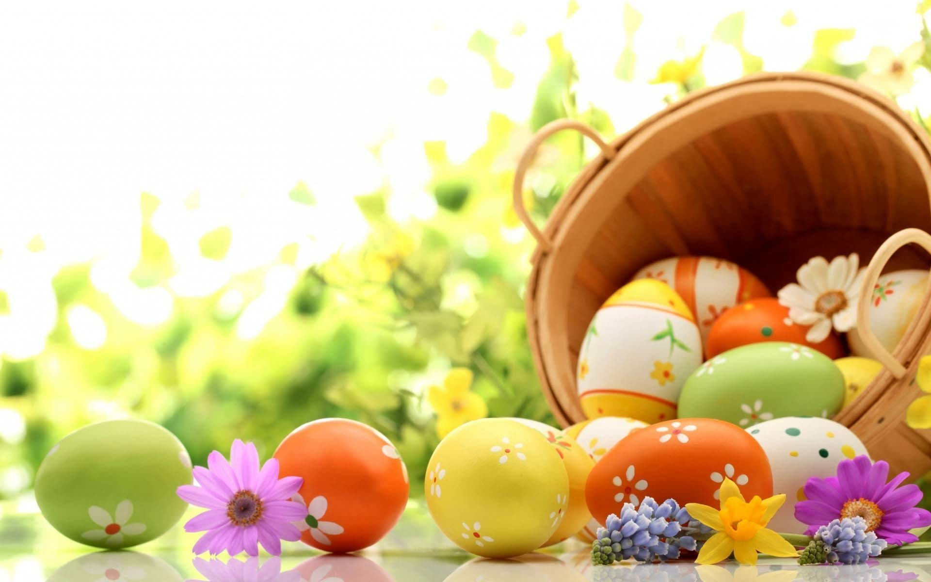 2560x1600 Wallpaper Easter Bunny Eggs Violets Daffodils White Background