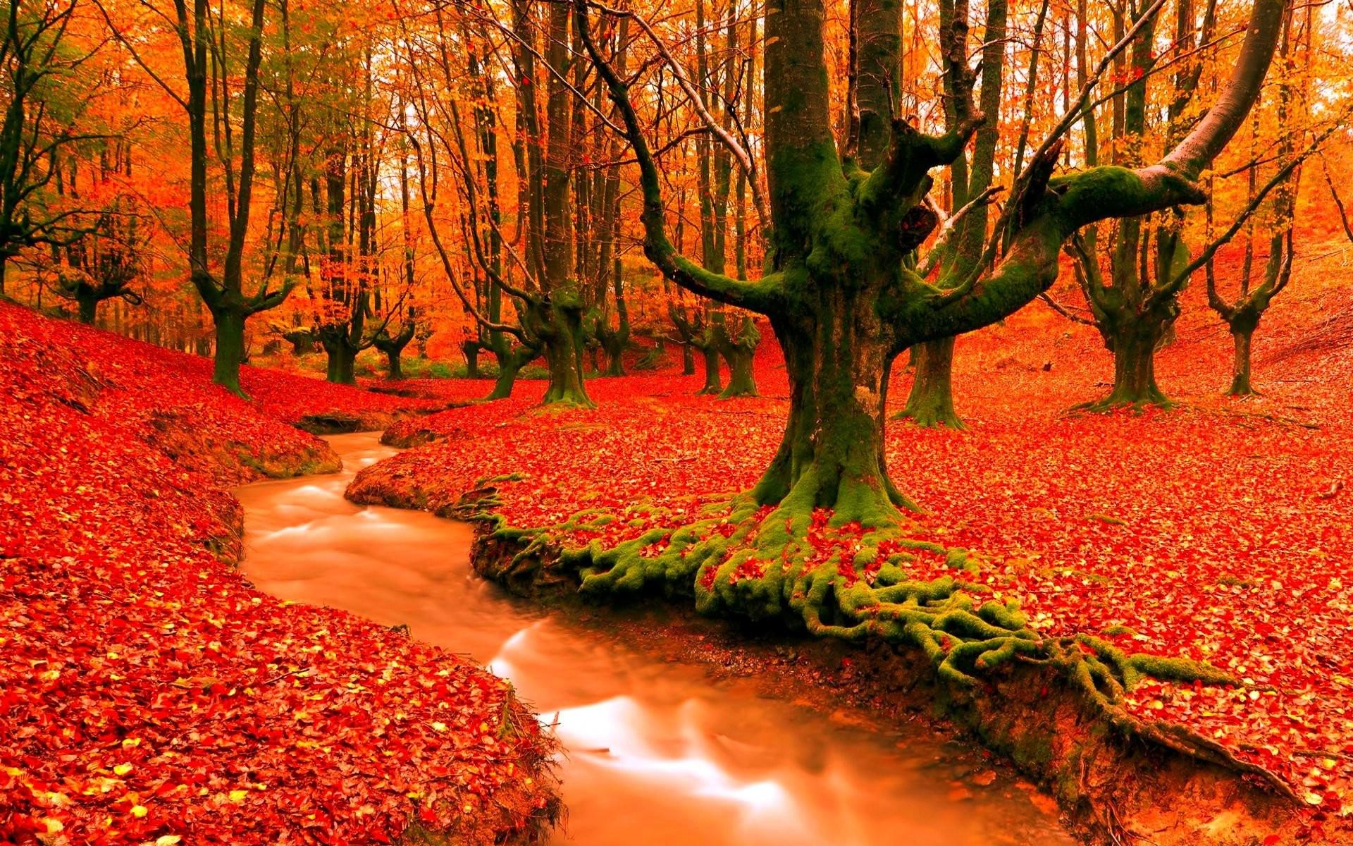 autumn season - photo #26