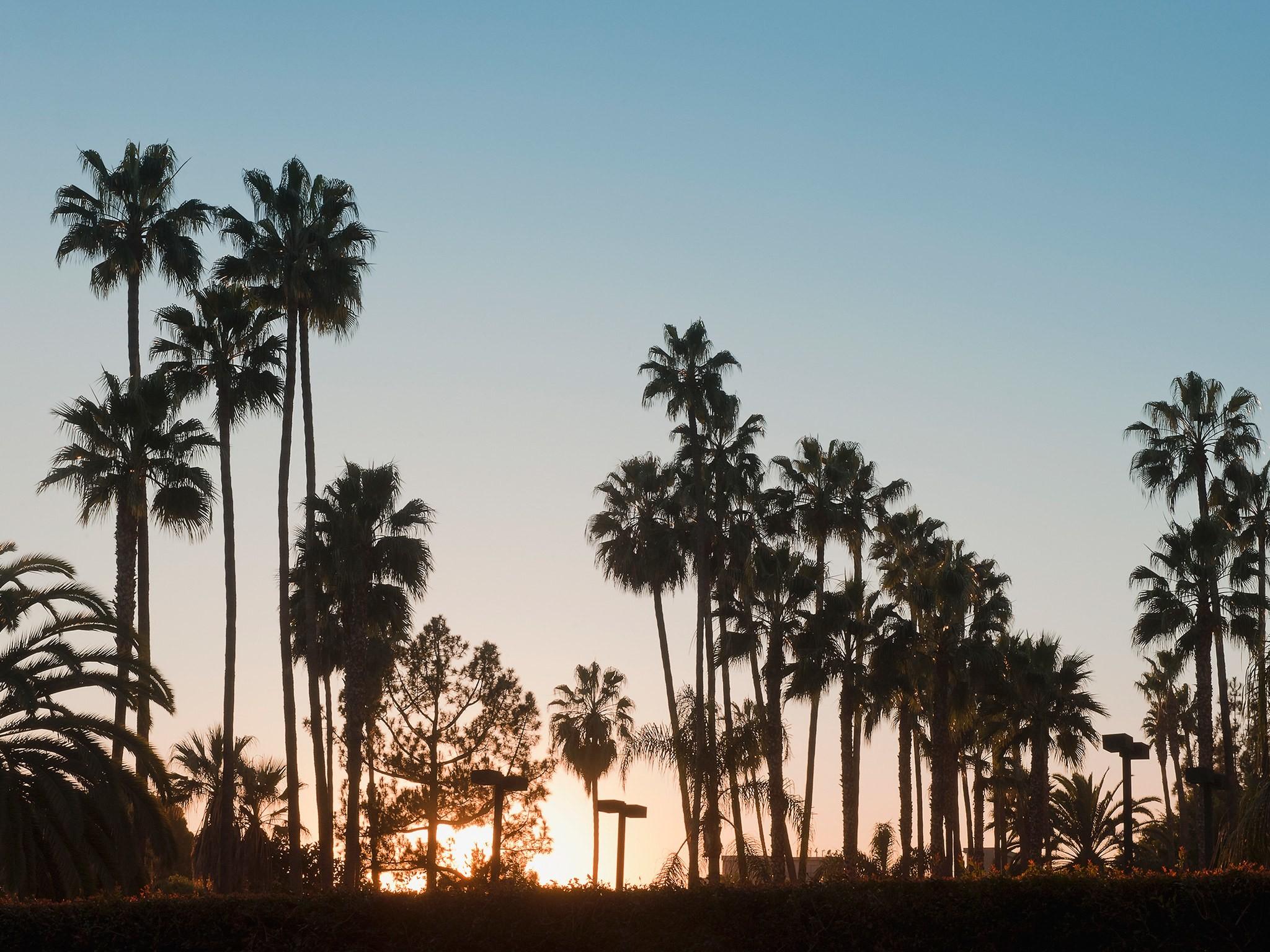 Venice Beach California Wallpaper 63 Images