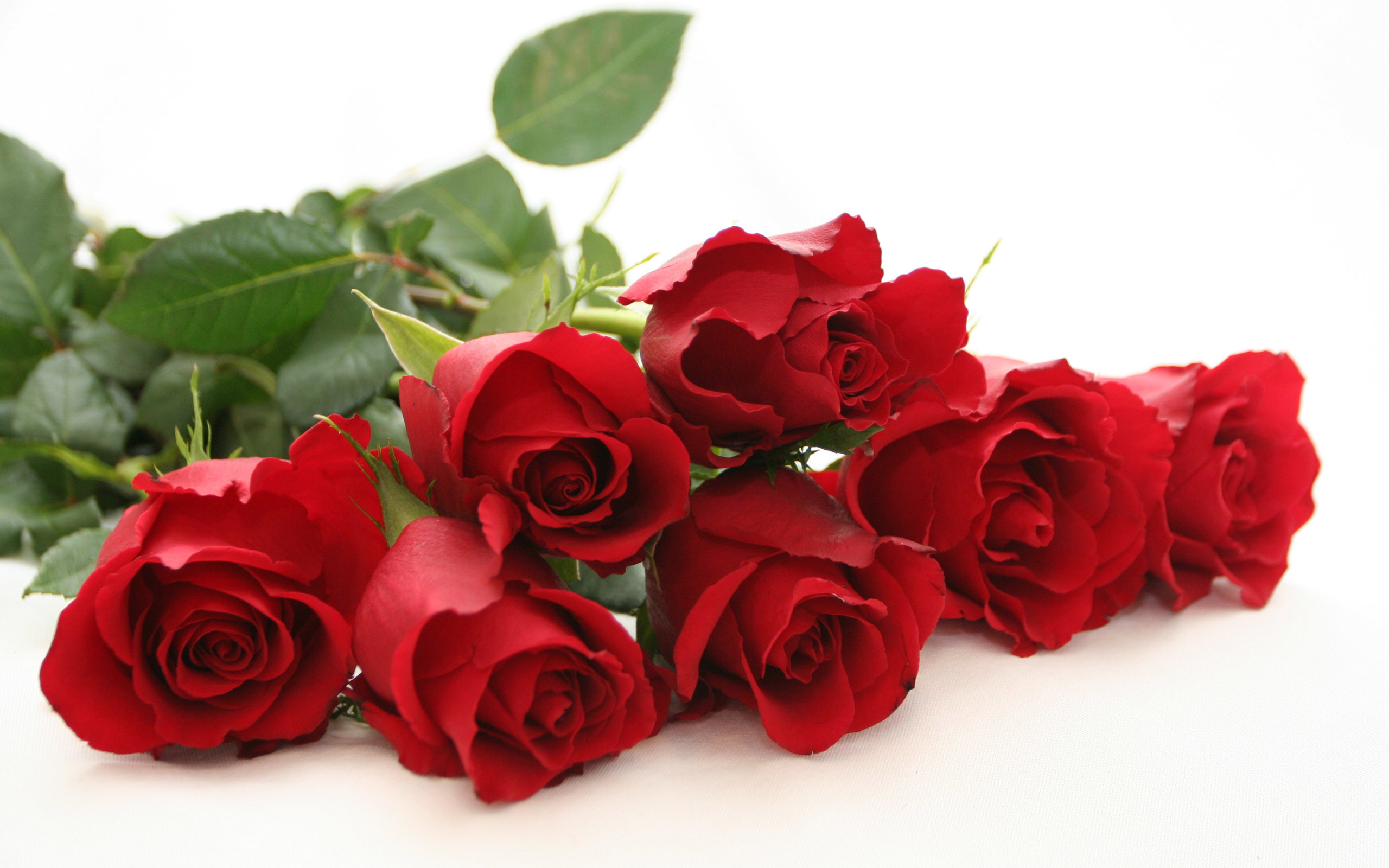 2560x1600 red roses Beautiful Rose Flower Wallpapers ...