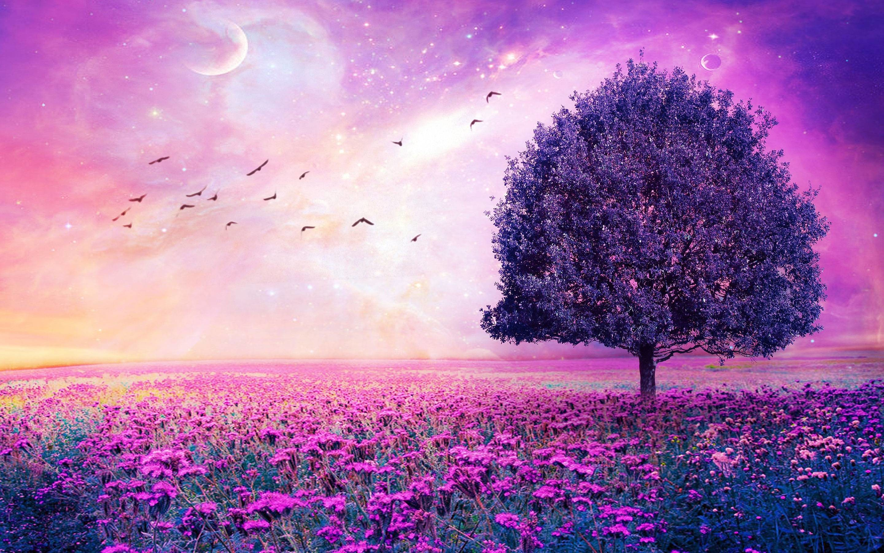 Purple Tree Wallpaper 51 Images