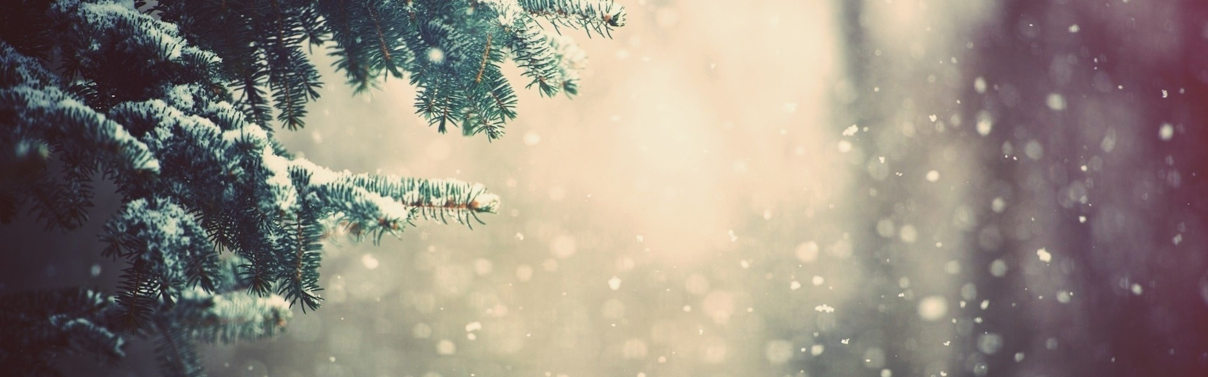 3840x1200 Preview wallpaper winter, spruce, branches, snow, glare