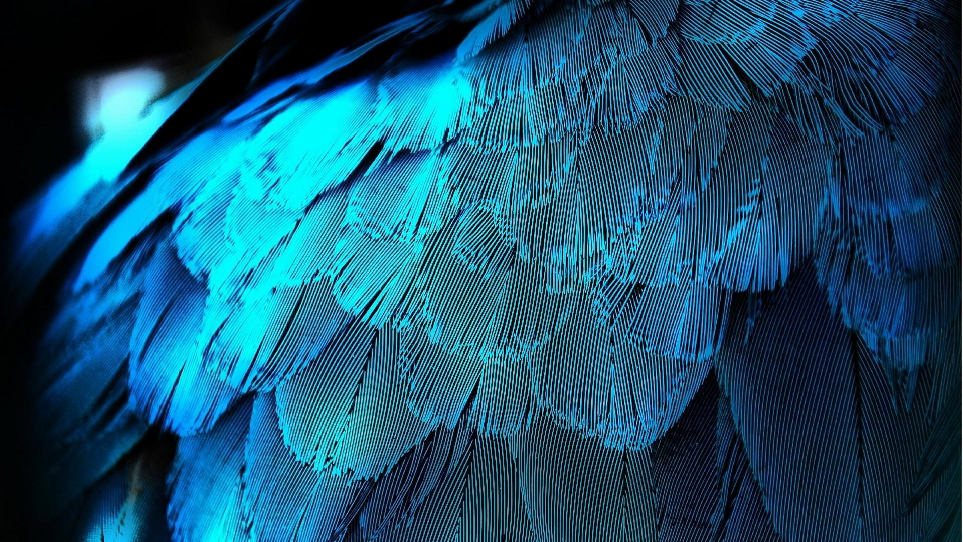 1920x1080 wallpaper.wiki-Pictures-blue-feather--PIC-WPB003119