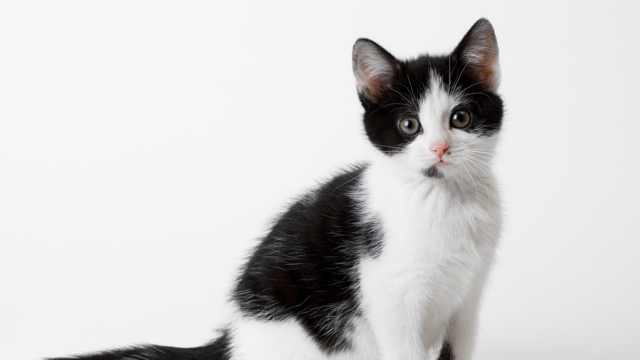 2048x1152 Cats And Kittens Black And White