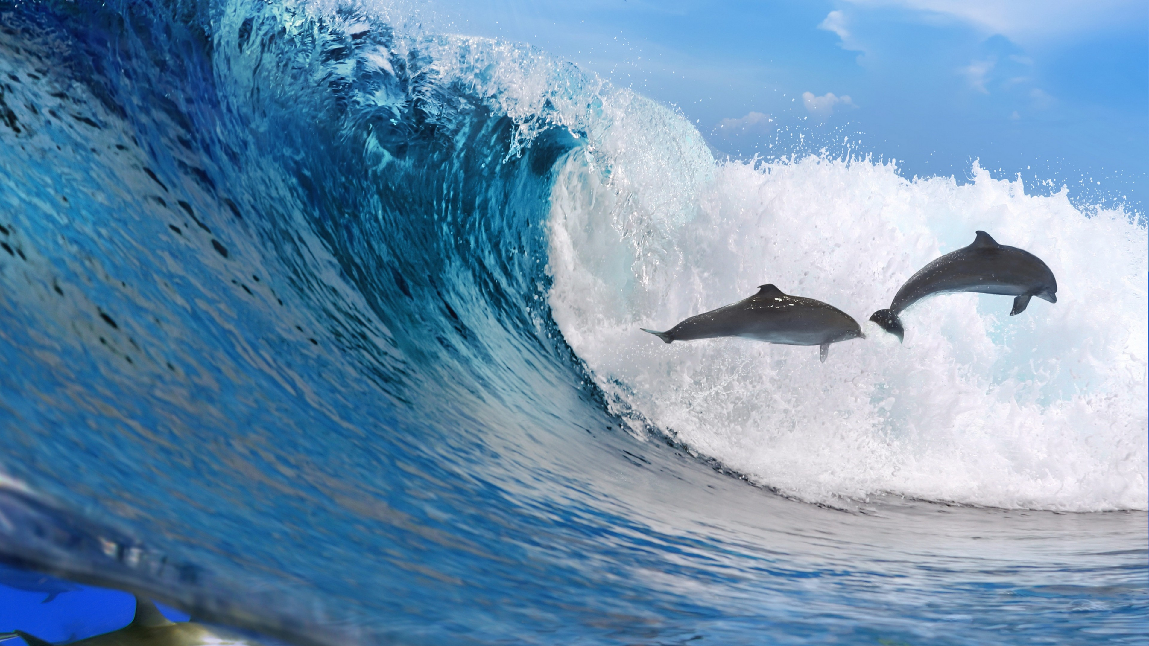 3840x2160  Wallpaper dolphins, ocean, wave, freedom