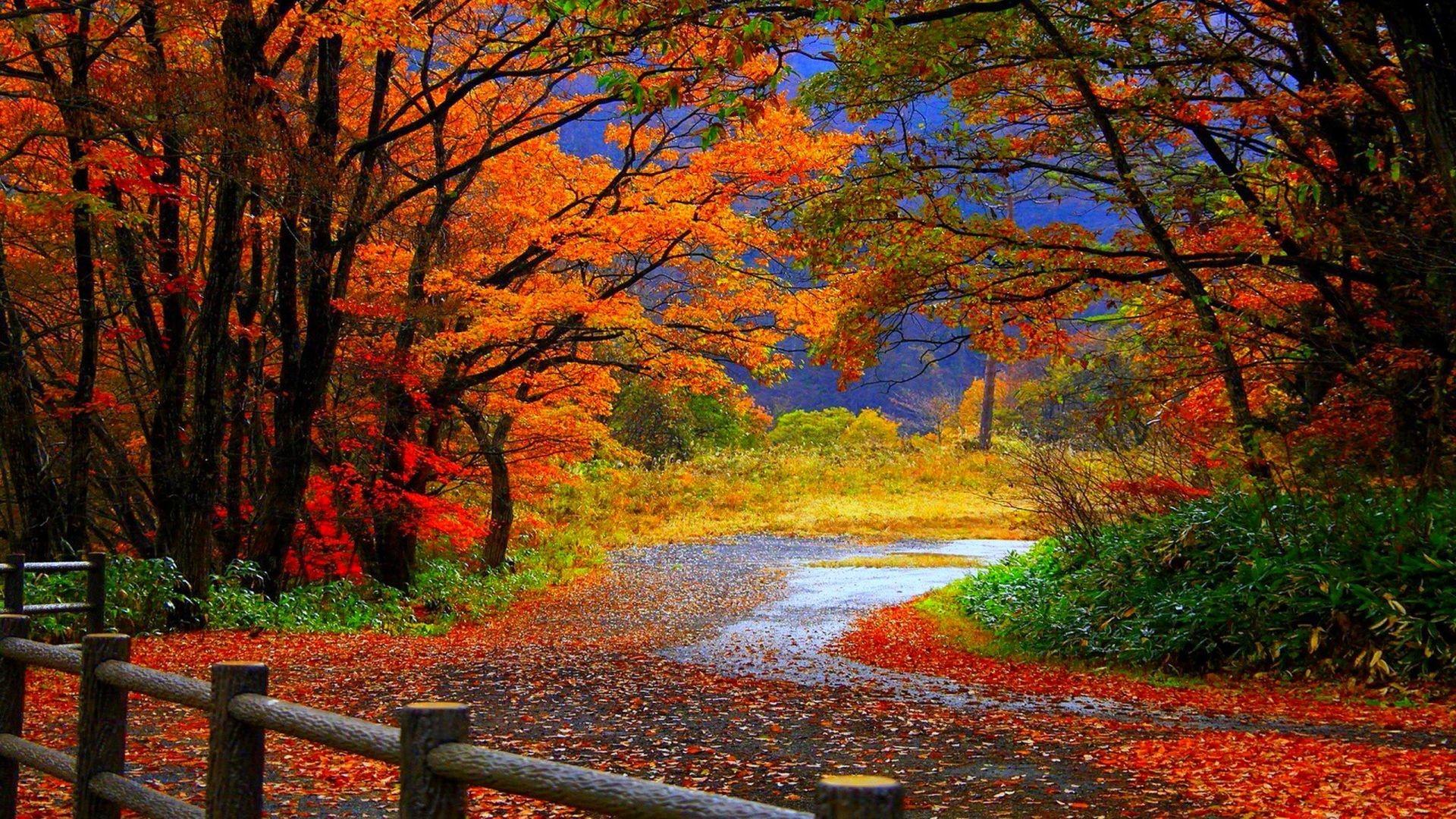 Autumn wallpaper backgrounds 60 images - Computer wallpaper nature ...