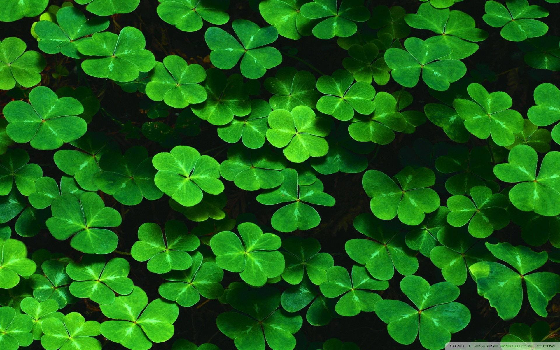St Patrick Day Backgrounds 47 Images