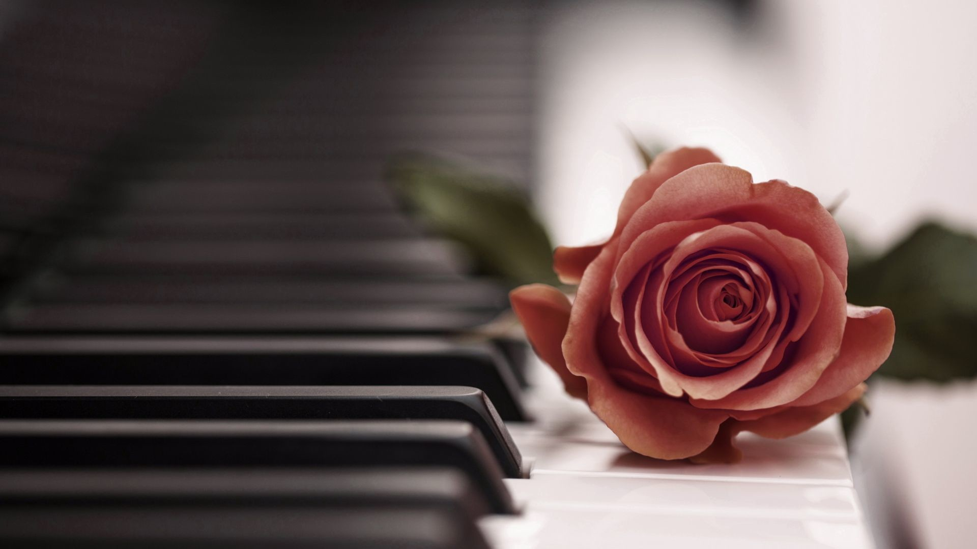 1920x1080 Rose Piano Wallpapers Phone with HD Desktop  px 501.35 KB