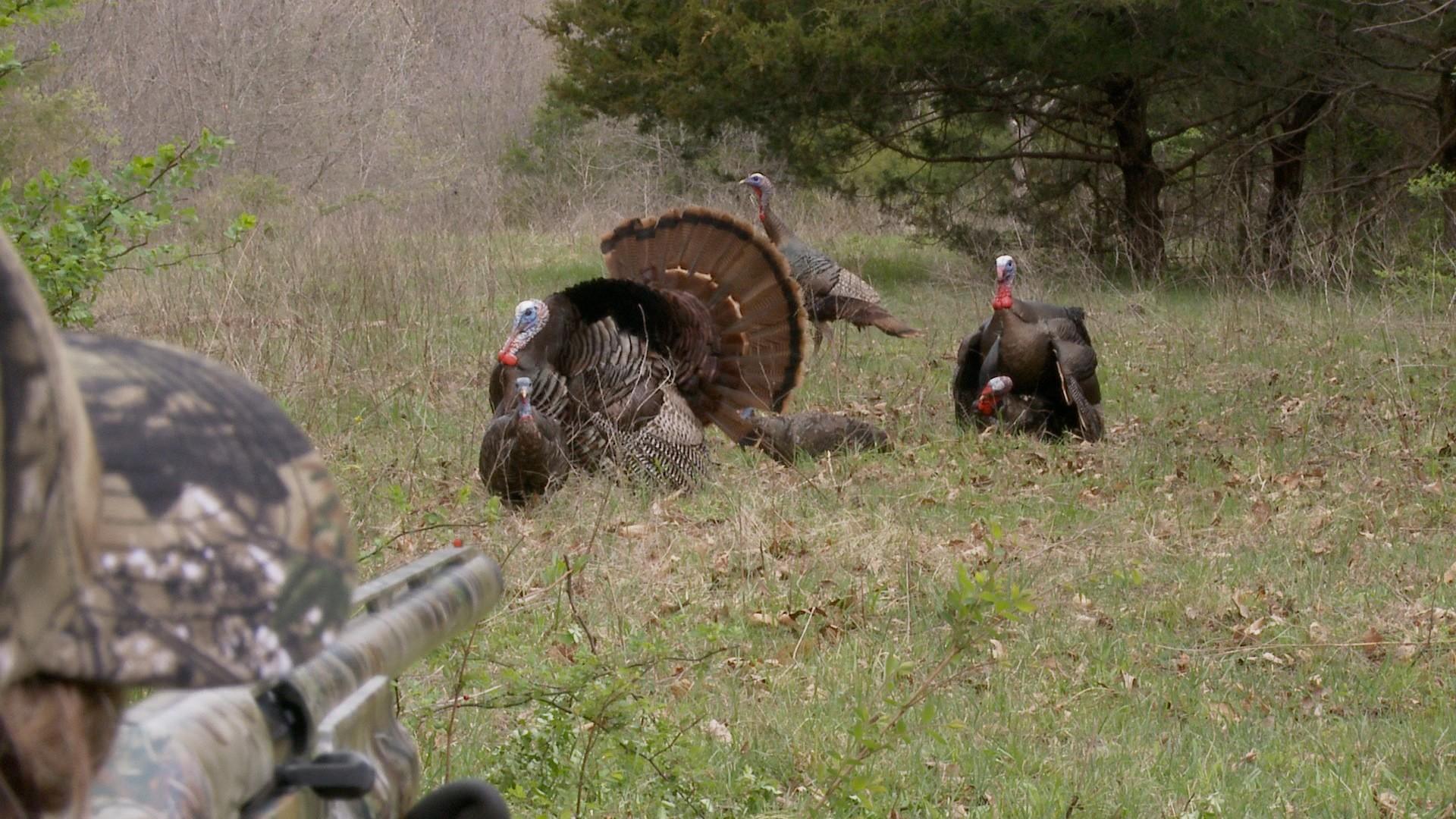 1920x1080 Wild Turkey HQFX Photos