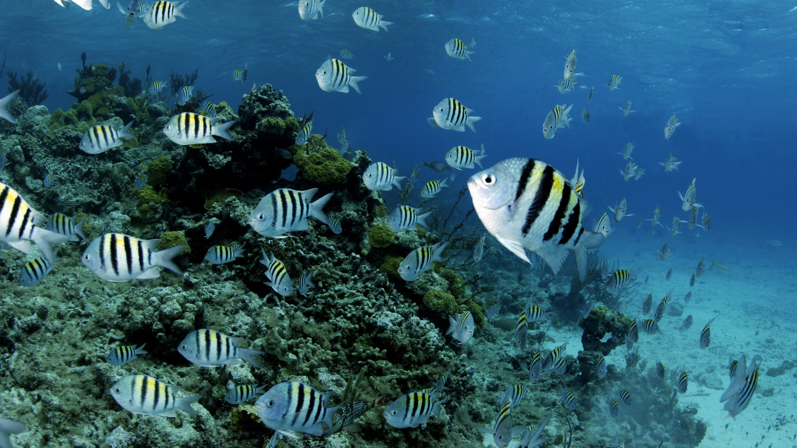 2560x1440 Animal - Fish Animal Sea Underwater Ocean Coral Wallpaper