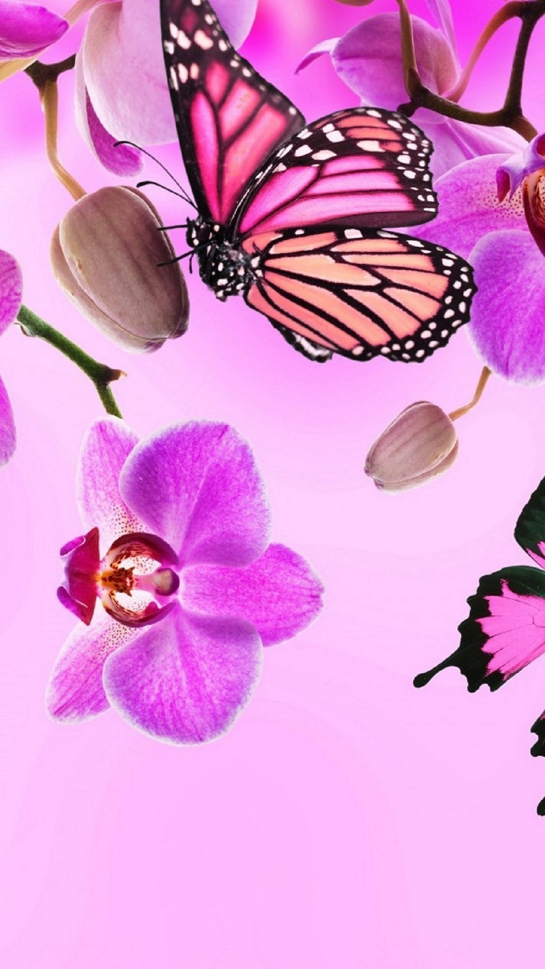 Pink Butterfly Wallpaper Desktop (84+ images)