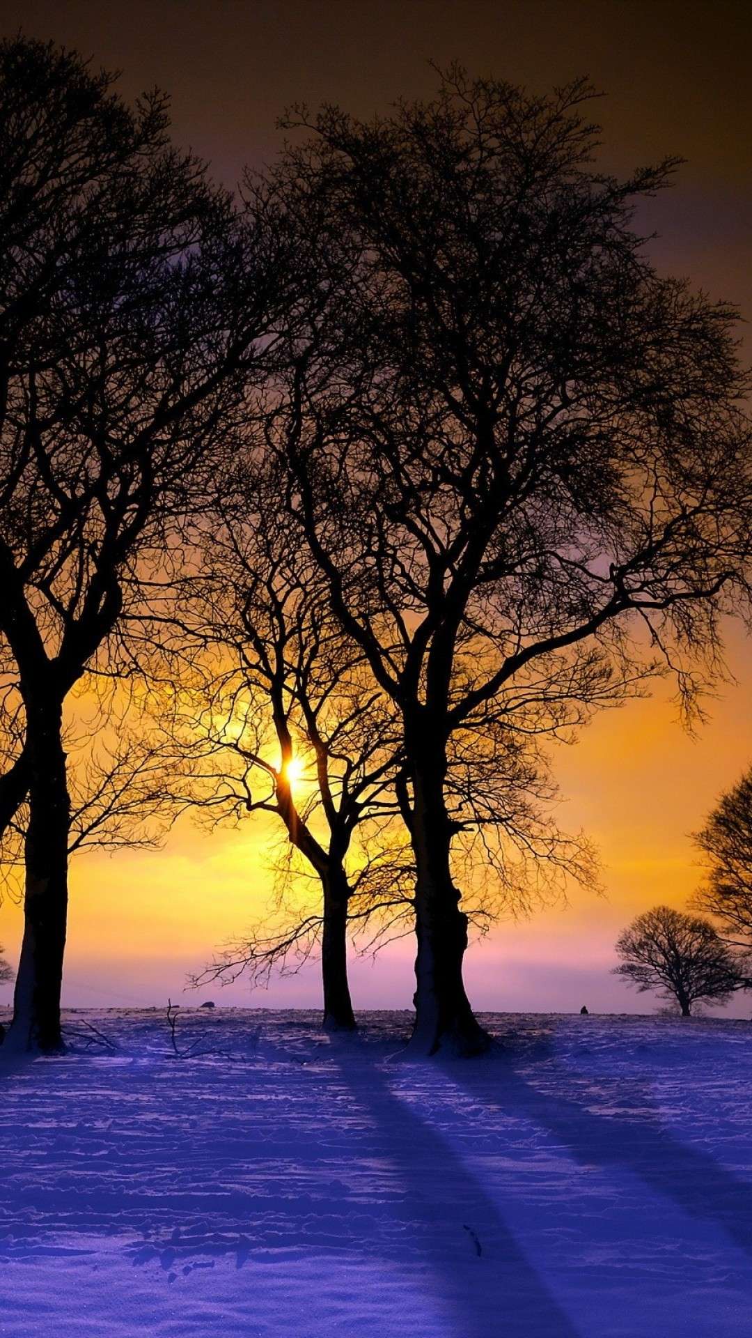 1080x1920 Download Wallpaper  sunset, winter, trees, landscape Sony Xperia  Z1, ZL,