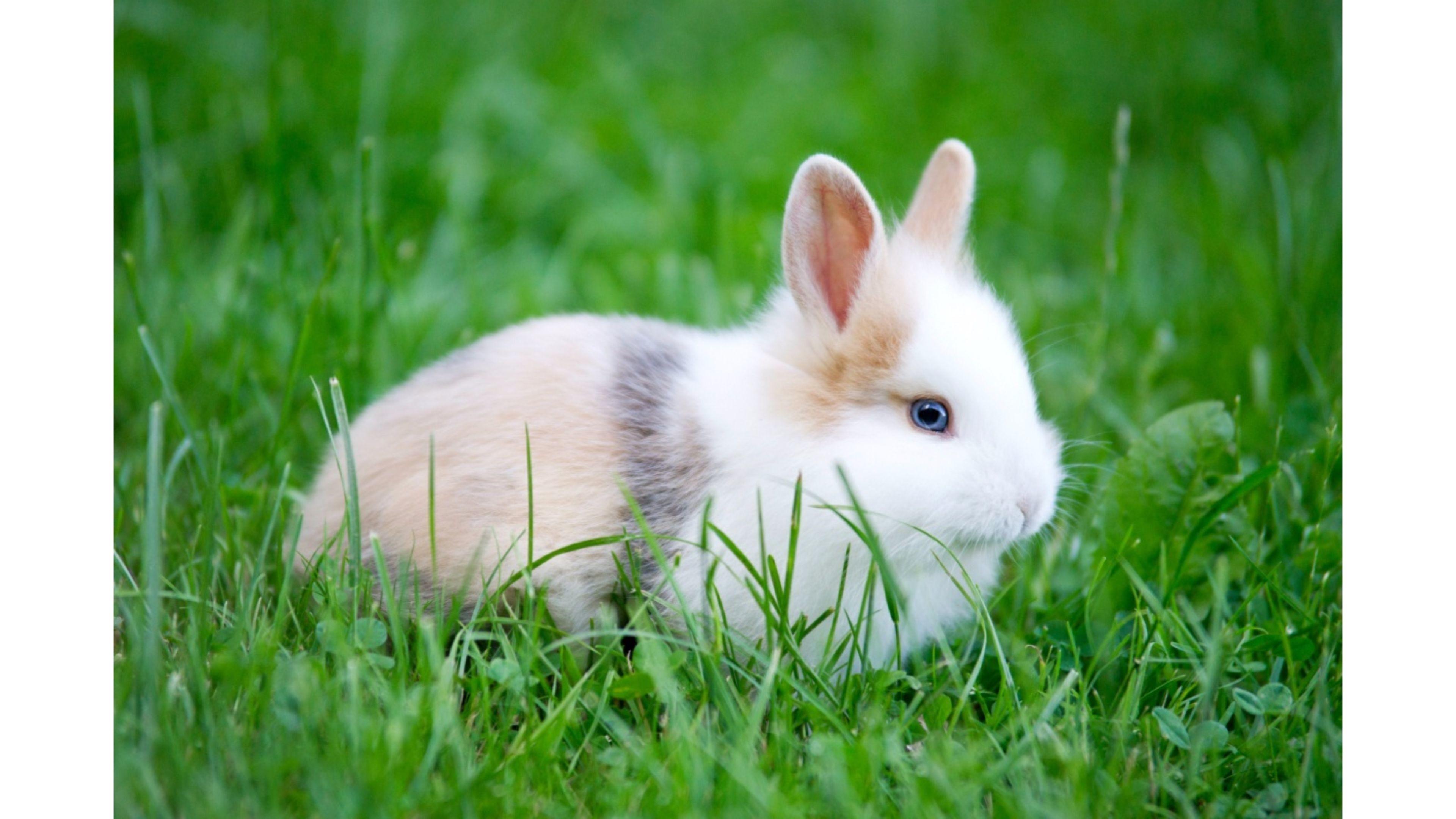 Cute Bunnies Wallpaper (65+ Images